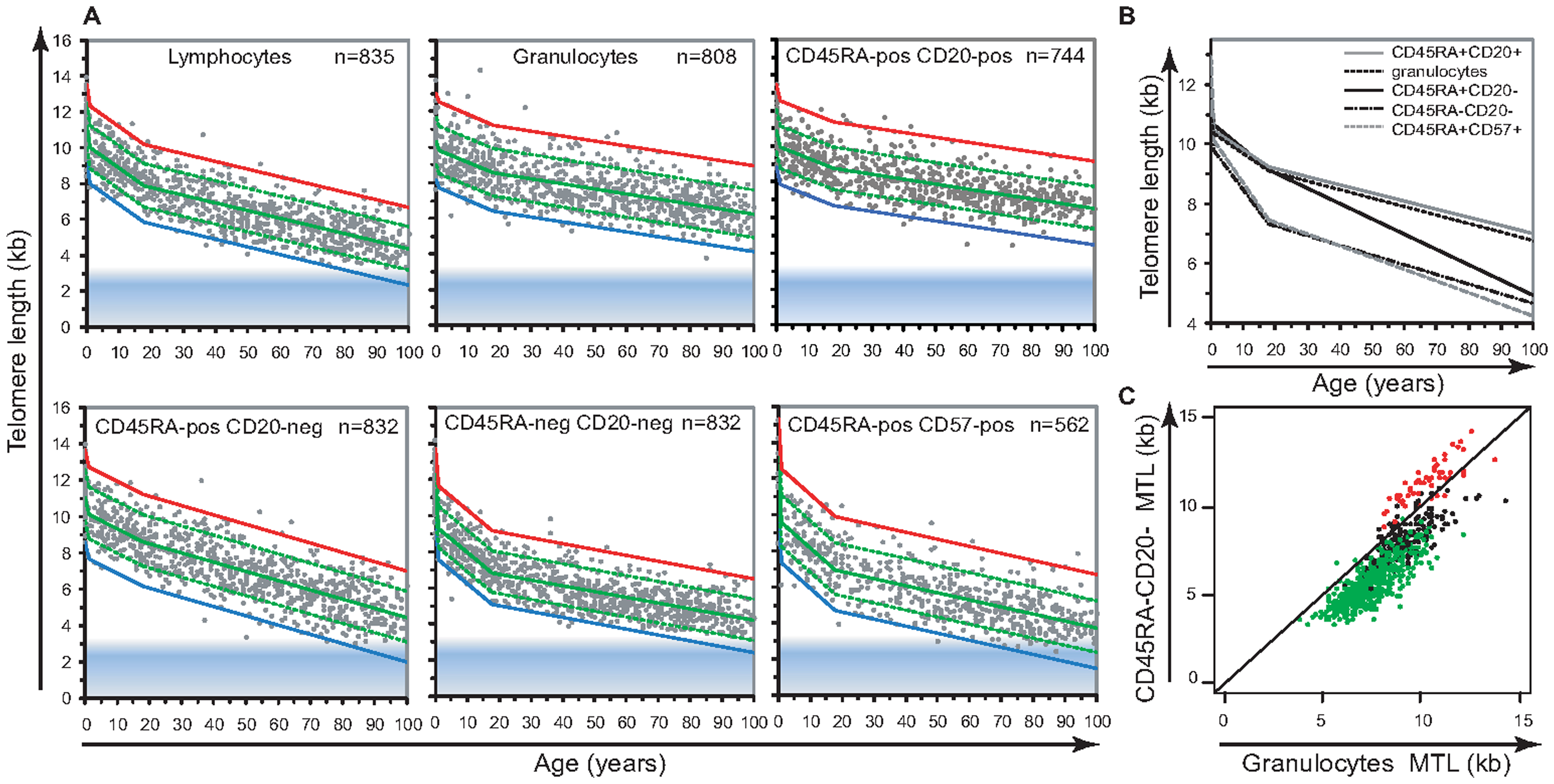 Cell type–specific differences in the range and attrition rate of leukocyte telomere length.