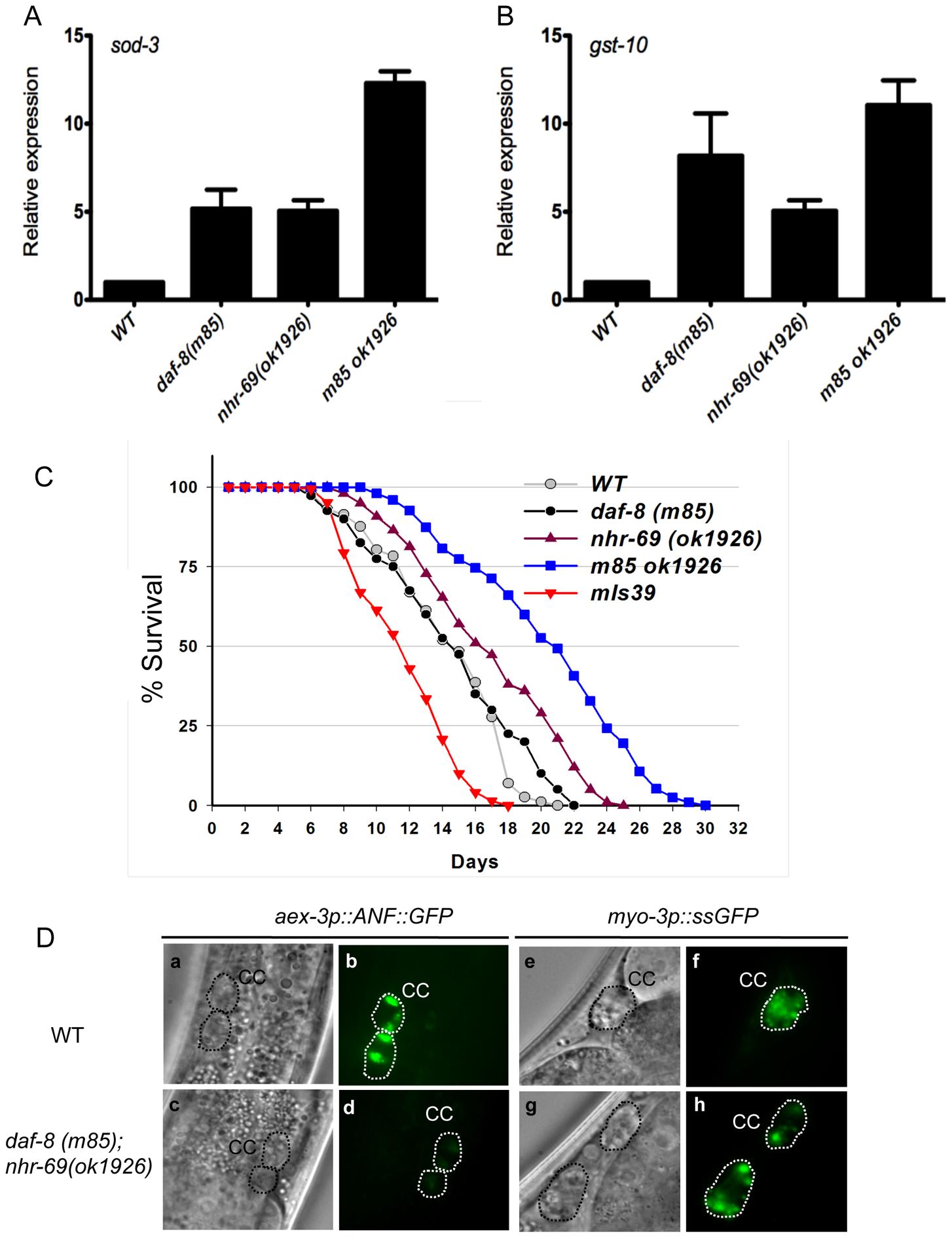 Reduced insulin signaling and neuropeptide secretion in <i>daf-8 nhr-69</i> mutants.