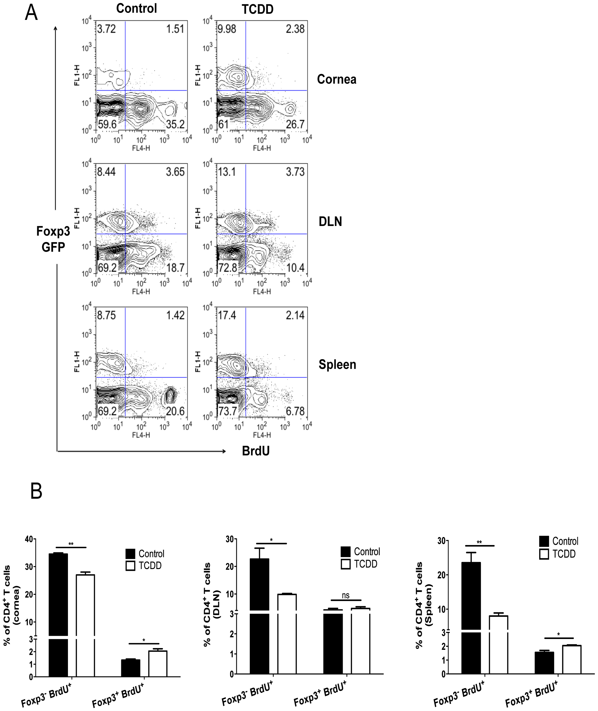 Differential proliferation of Treg over Foxp3<sup>-</sup>CD4<sup>+</sup> T cells in TCDD treated mice after HSV-1 infection.