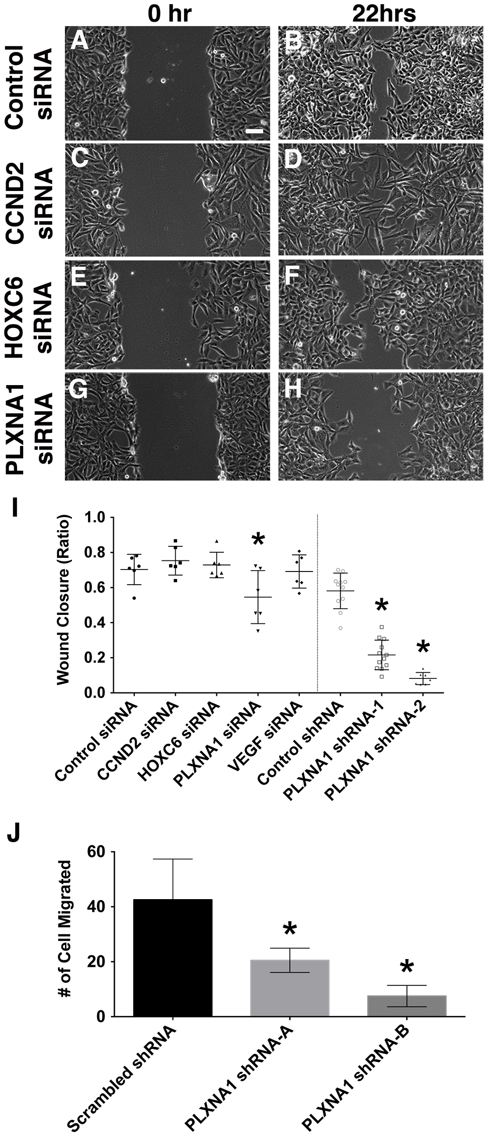 Knockdown of PLXNA1 impairs migration of human ERMS cells.
