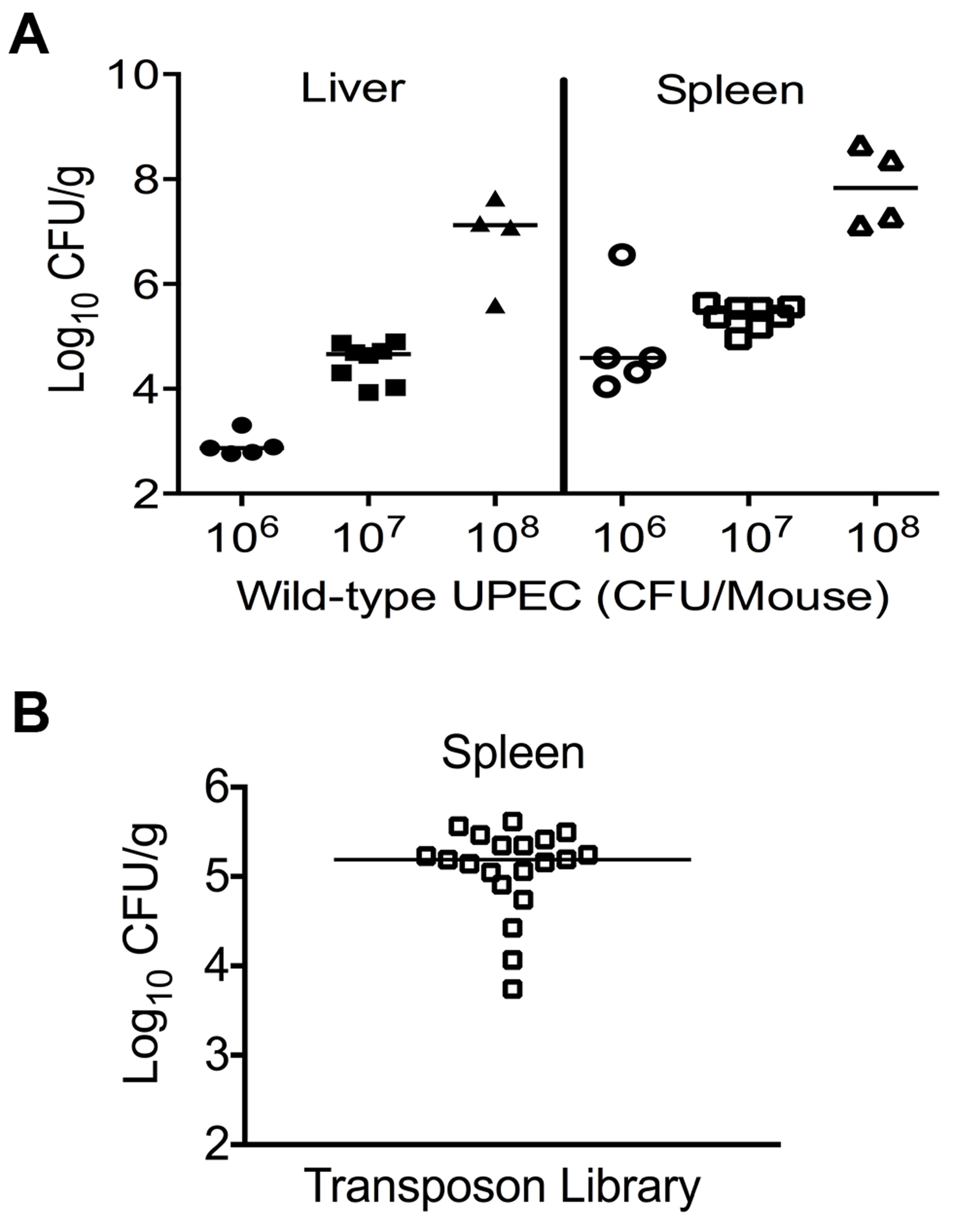 Colonization of uropathogenic <i>E. coli</i> during systemic disseminated infection in mice.