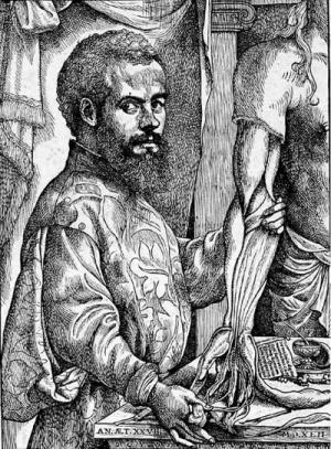 Andreas Vesalius Bruxellensis