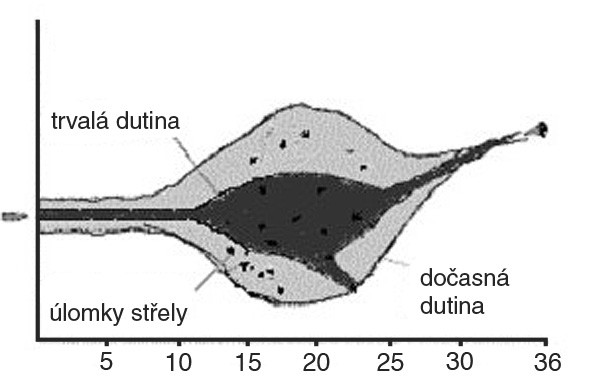 Profil rány střely 5,56 mm FMC (pro pušku M16A1) Fig. 3. Wound profile of bullet Cal. 5.56 mm FMC (for rifle M16A1)