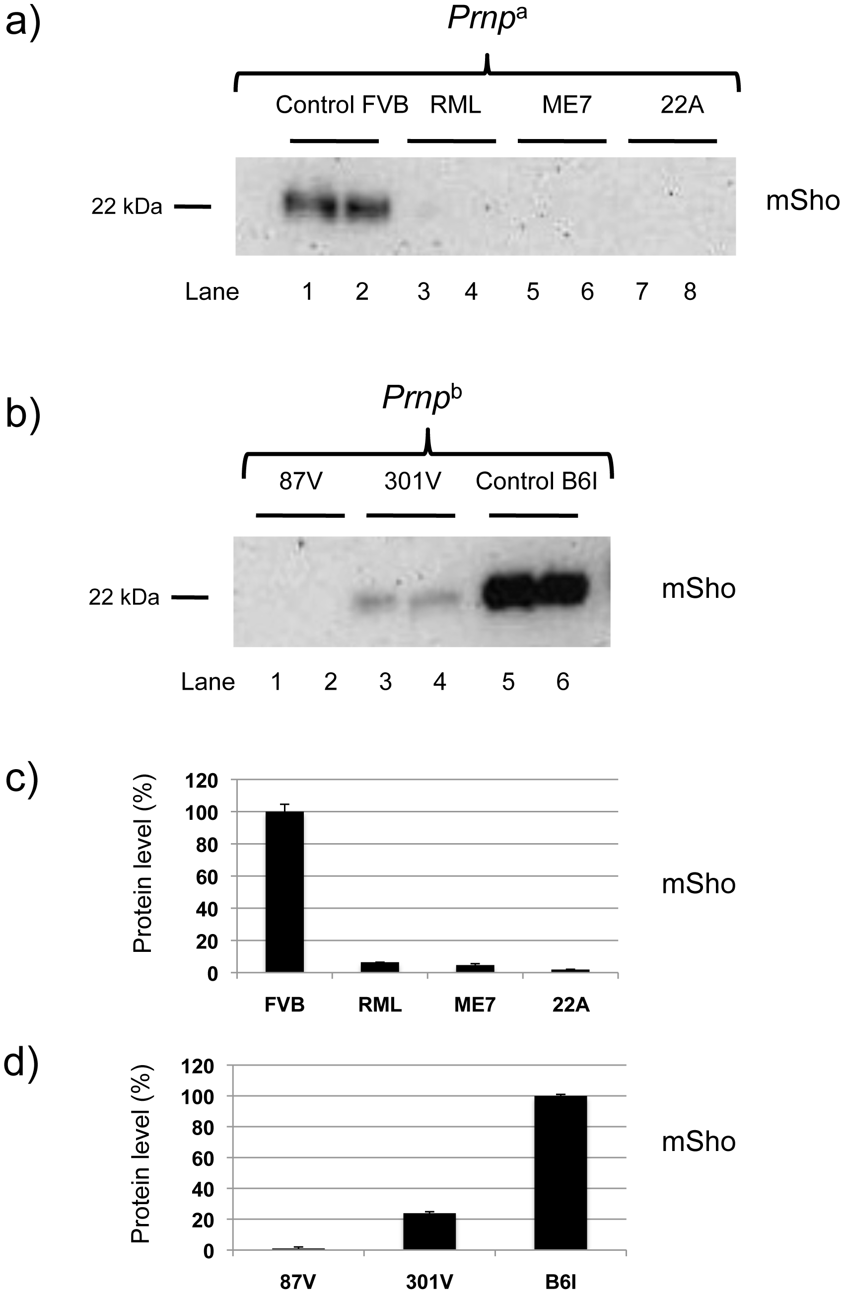 Sho levels at disease endpoint in mice infected with different prion strains.