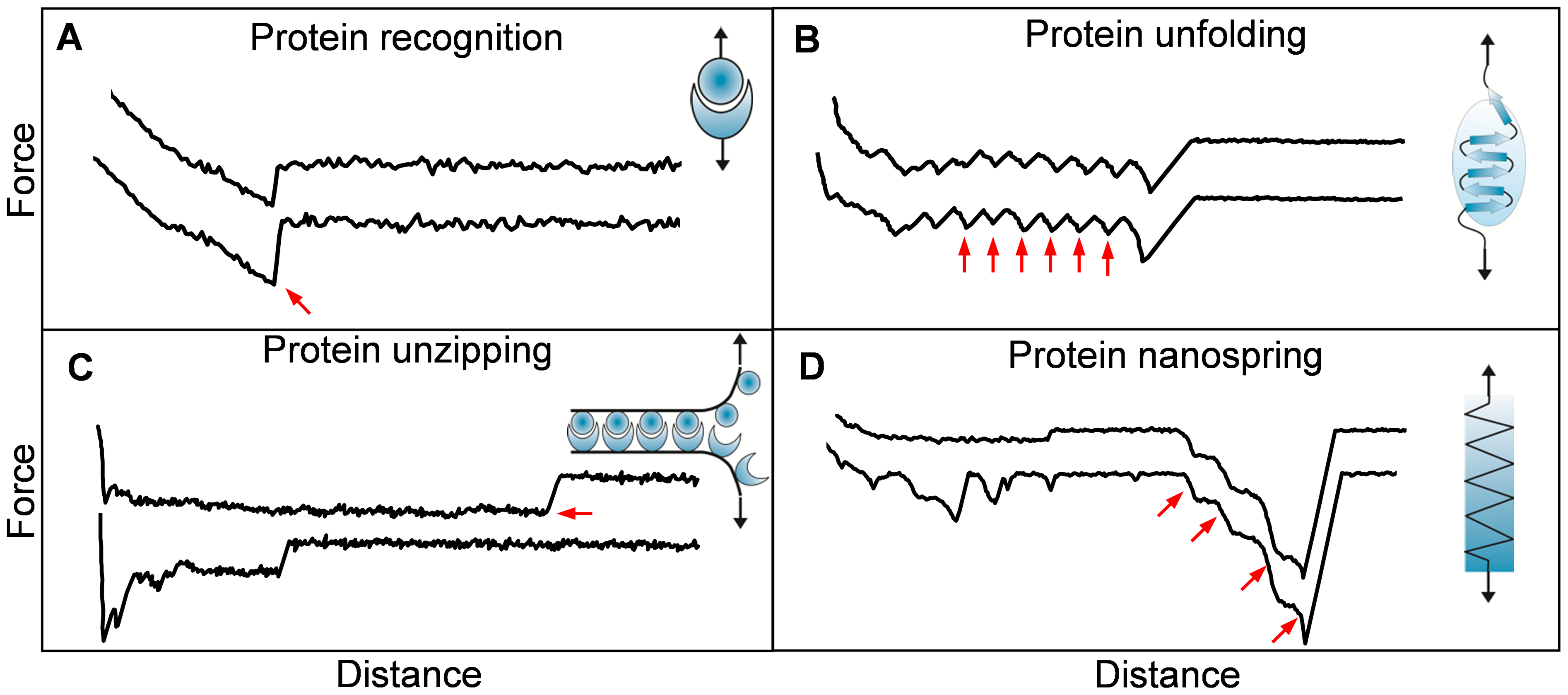 Single-molecule force spectroscopy experiments unravel the nanomechanics of microbial adhesins.