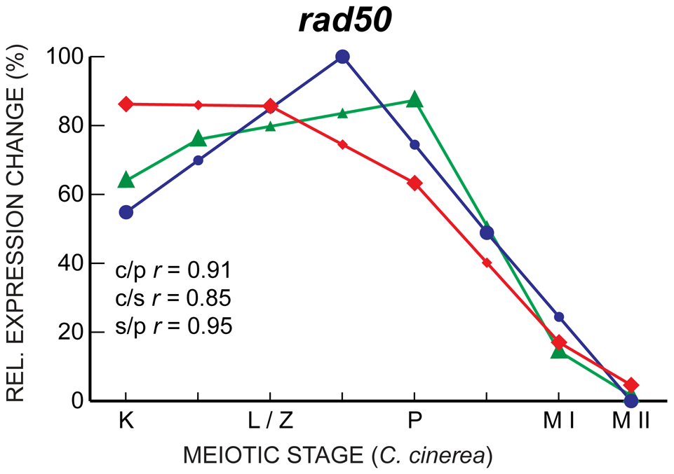 <i>rad50</i> expression is well-correlated in <i>C. cinerea</i>, <i>S. pombe</i>, and <i>S. cerevisiae</i>.