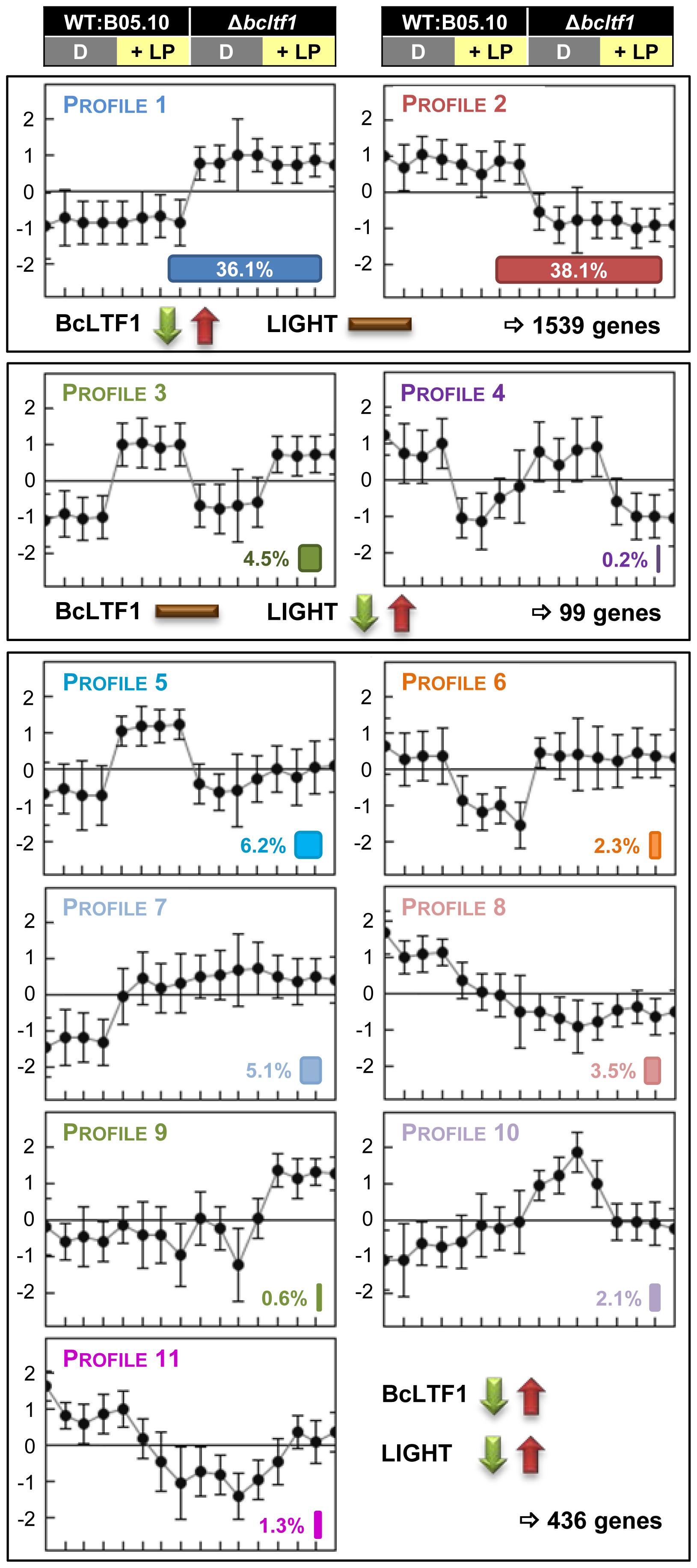 BcLTF1 modulates the transcriptional responses to light.