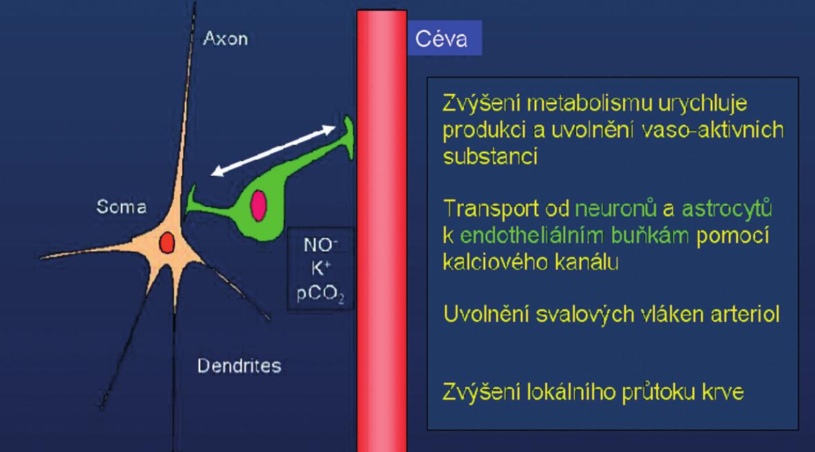Schéma neuro-vaskulární vazby: při zvýšení neuronální aktivity dojde tímto mechanismem k lokálnímu zvýšení krevního průtoku