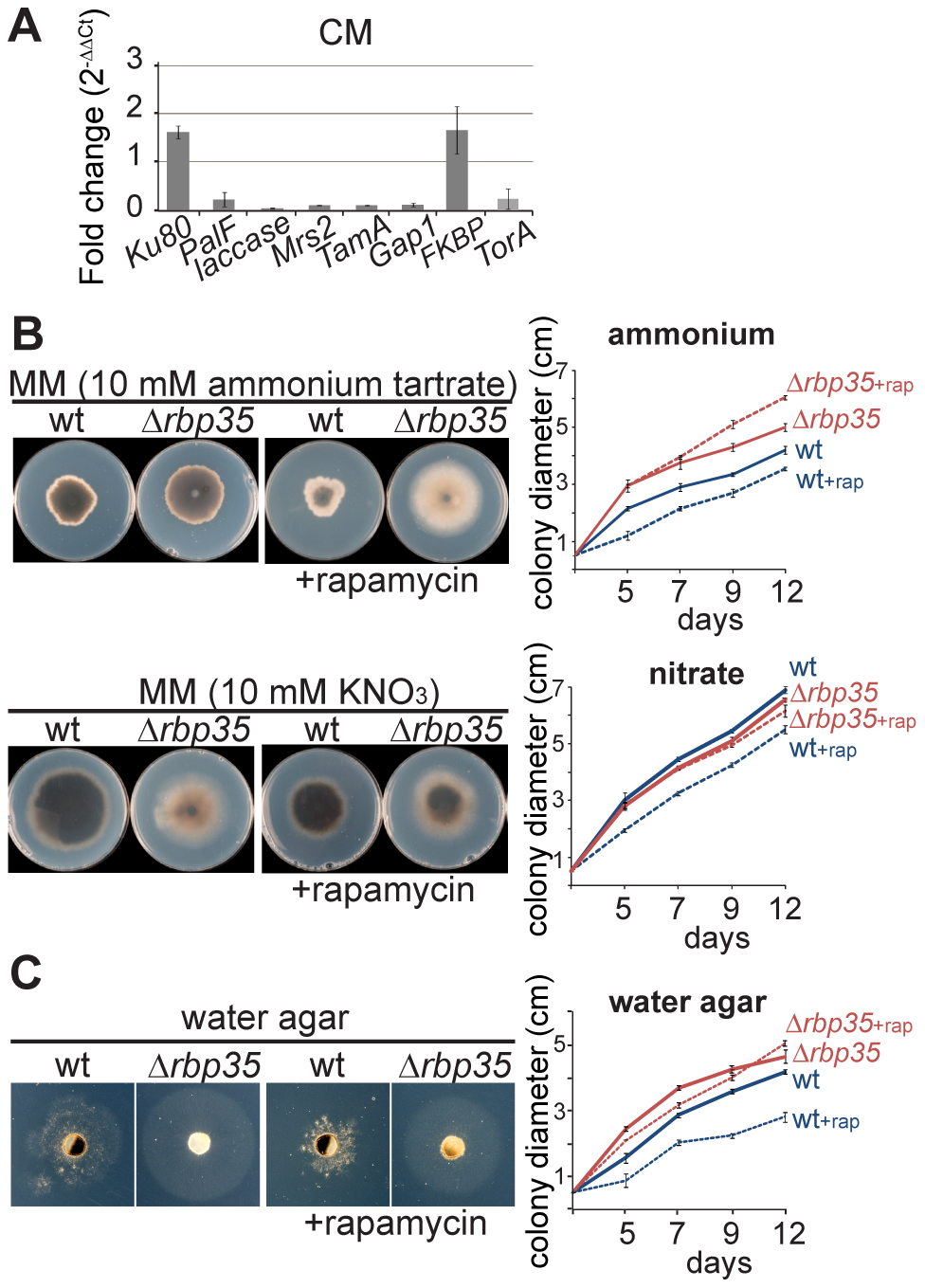 <i>Δrbp35</i> shows defects in nitrogen metabolism and TOR signaling.
