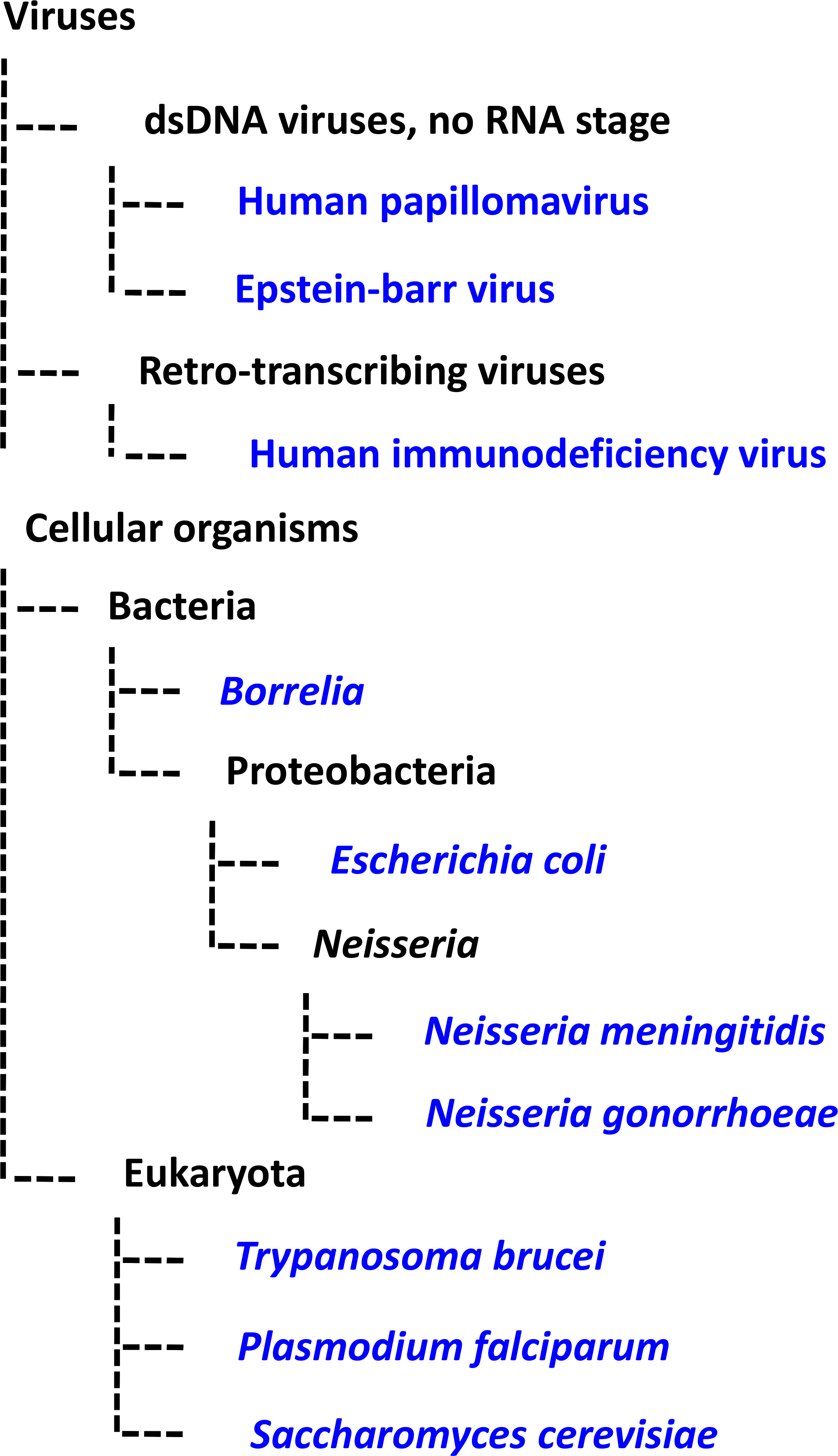 Phylogenetic tree schematic displaying the evolutionary relationships among the pathogens discussed in this review.