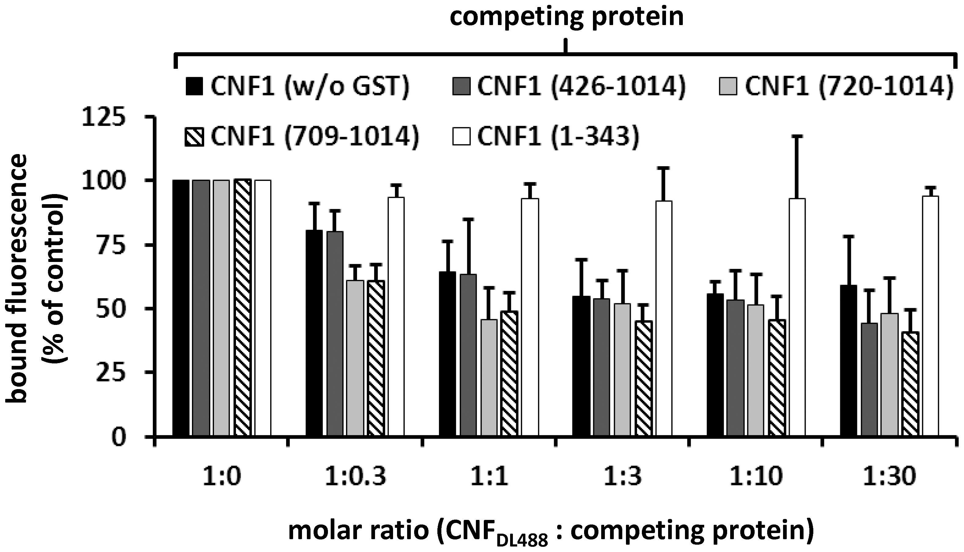 CNF1 binds to the cell surface via a C-terminal peptide.