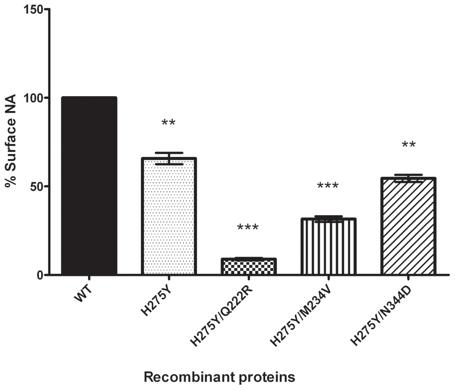 Surface activity of recombinant A/Brisbane/59/2007-like (H1N1) neuraminidase proteins.