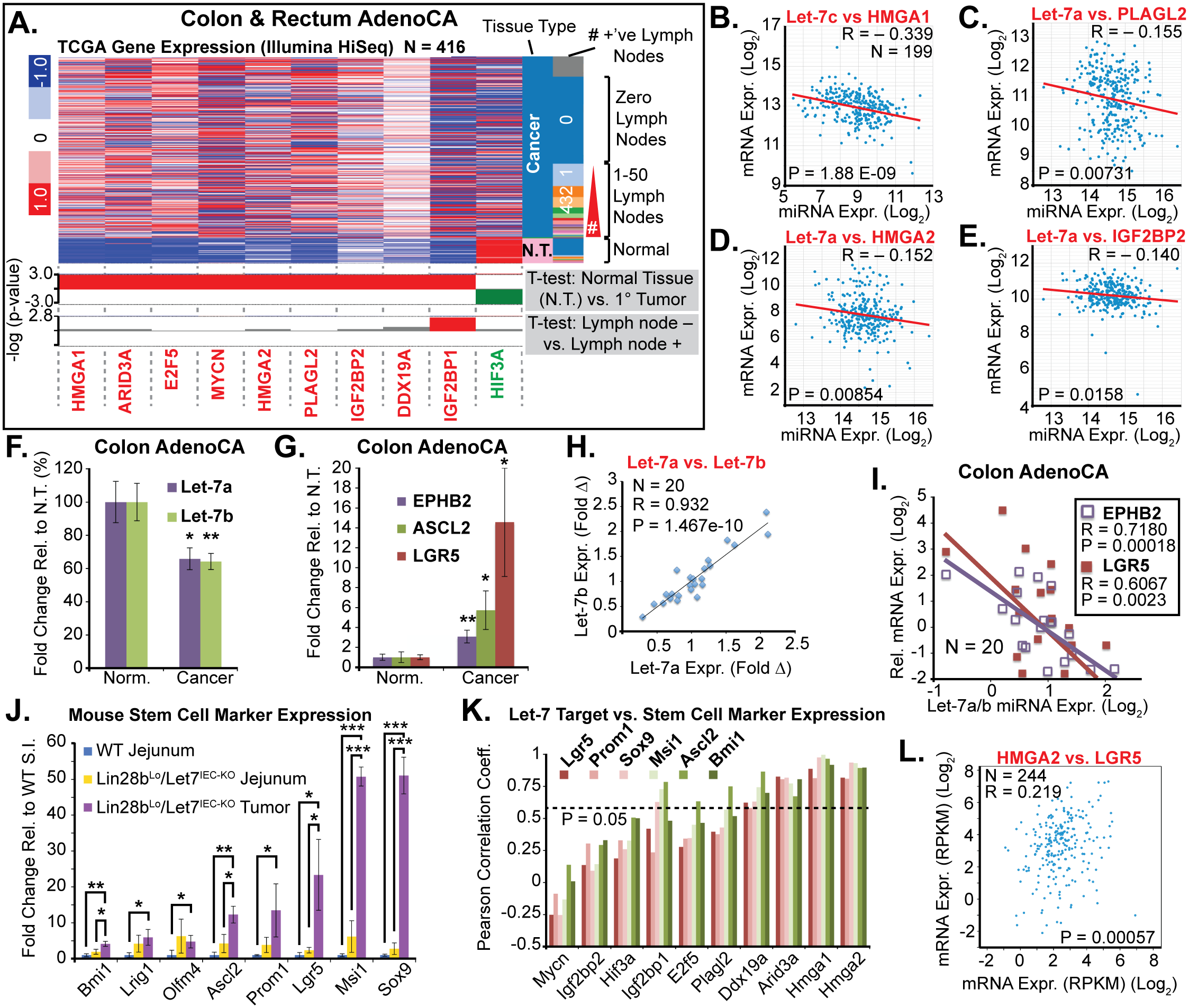 Let-7 and HMGA2 are associated with a stem cell signature in intestinal adenocarcinomas.