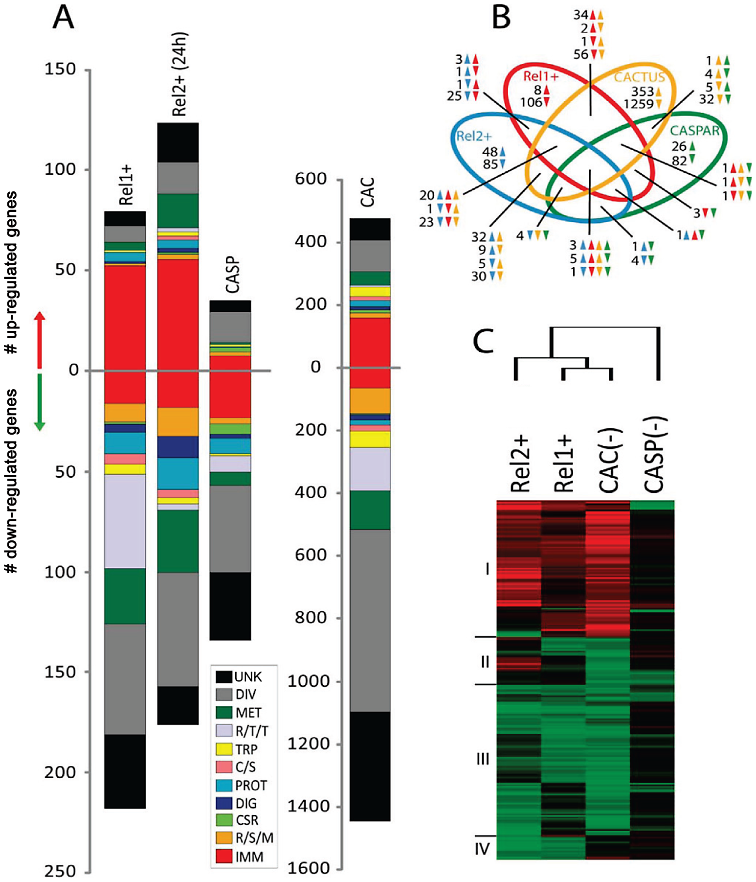 Comparative transcriptome analysis of fat body genes in REL1+ and REL2+ transgenic mosquitoes.