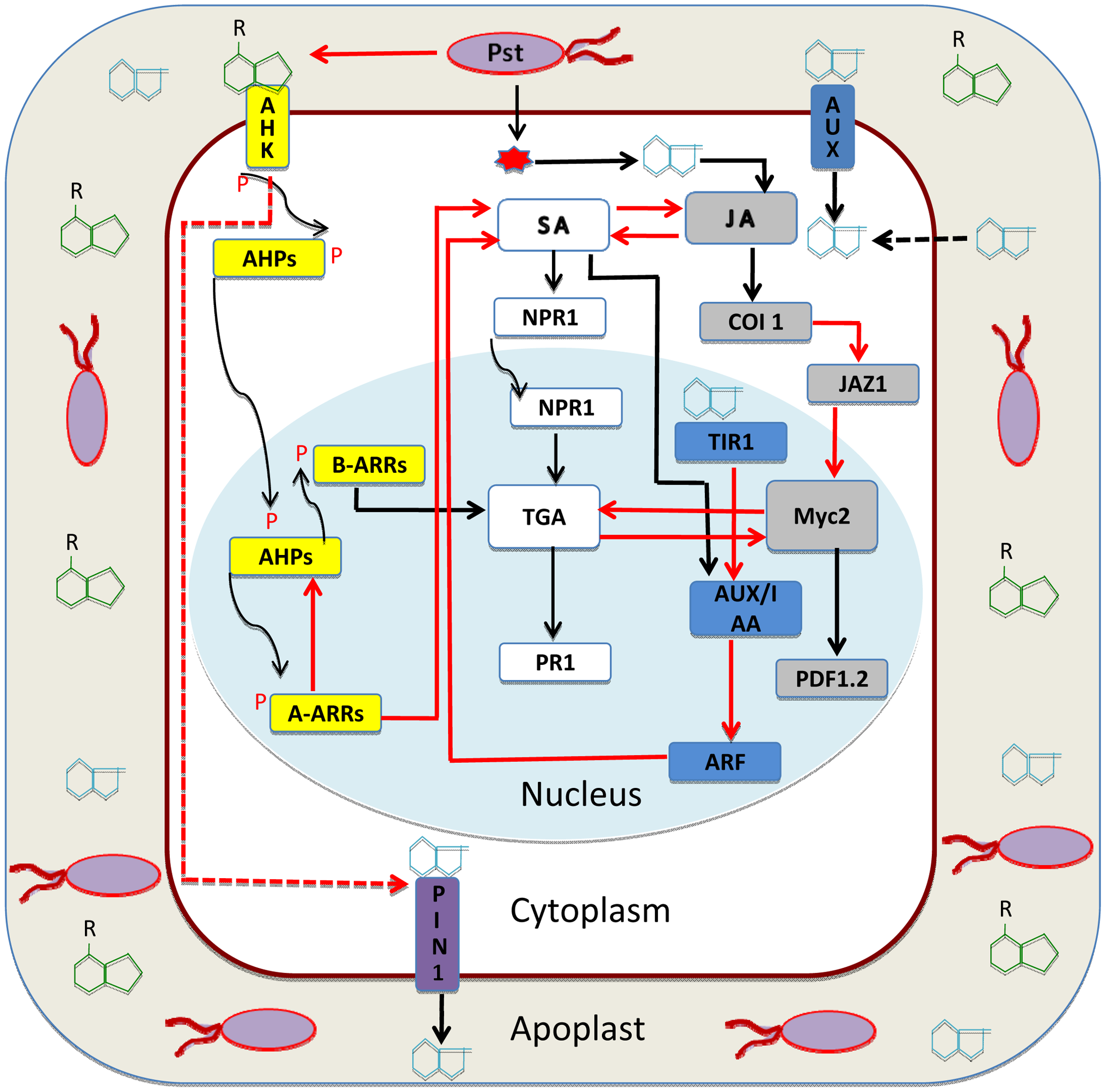 Auxin-cytokinin interaction in plant immunity.