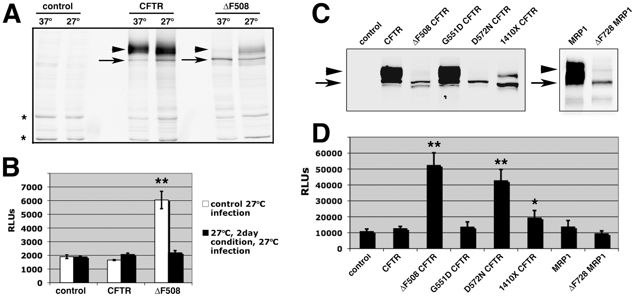 Effect of low temperature conditioning or expression of other misfolded proteins on AAV2 infection.