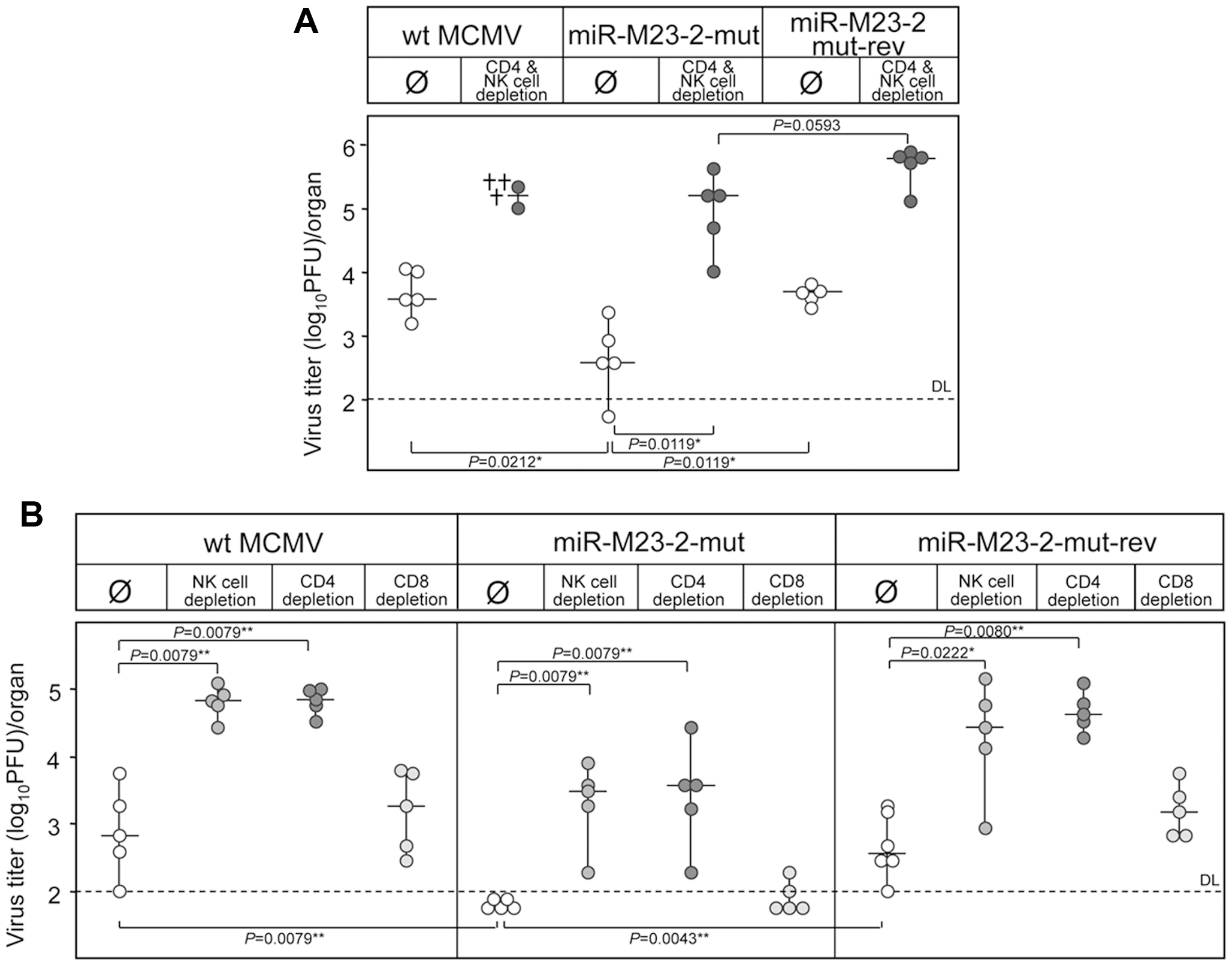 Reversion of the miRNA mutant phenotype by immune cells depletion.
