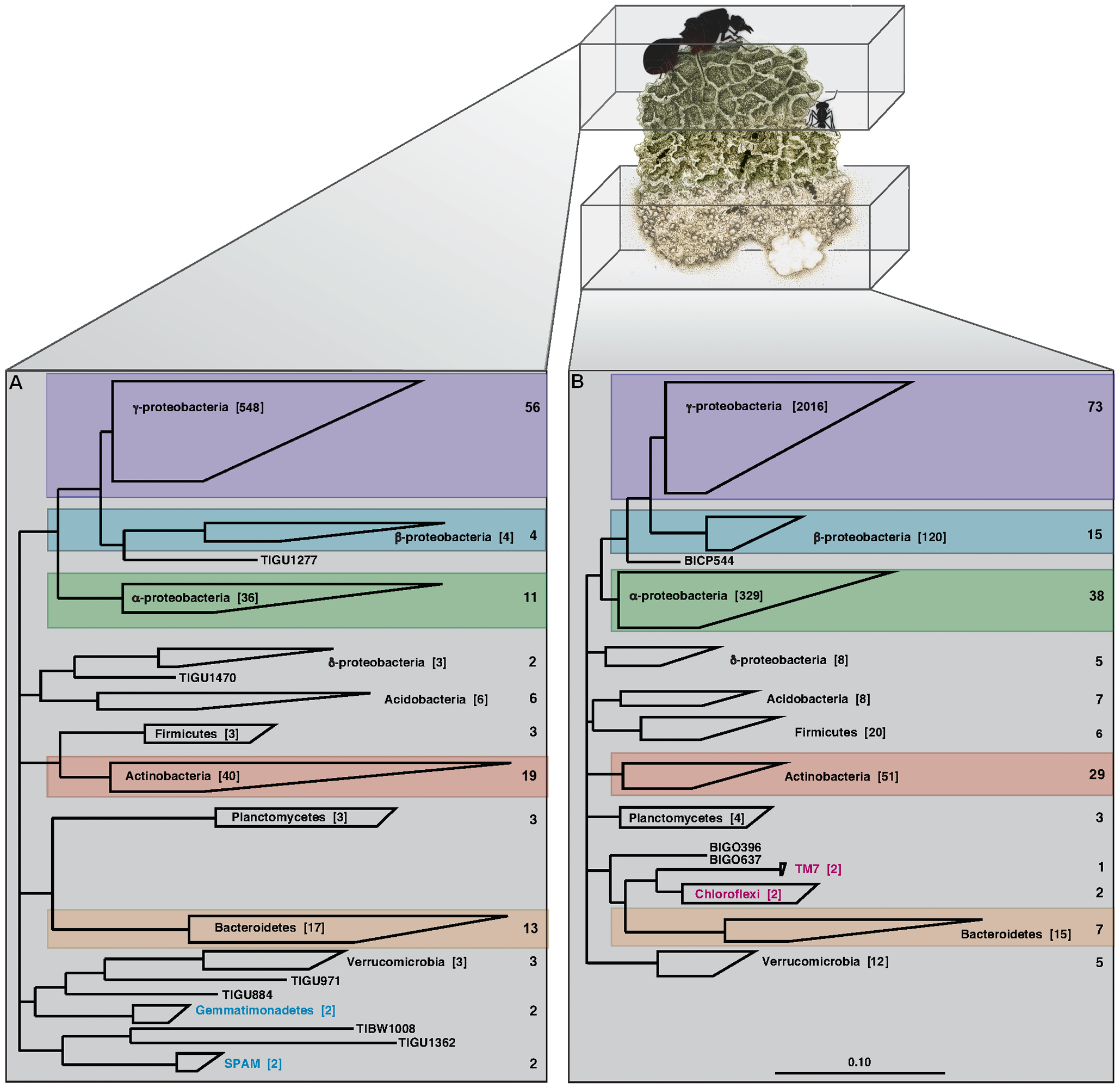 Phylogenetic analysis of the leaf-cutter ant fungus garden.