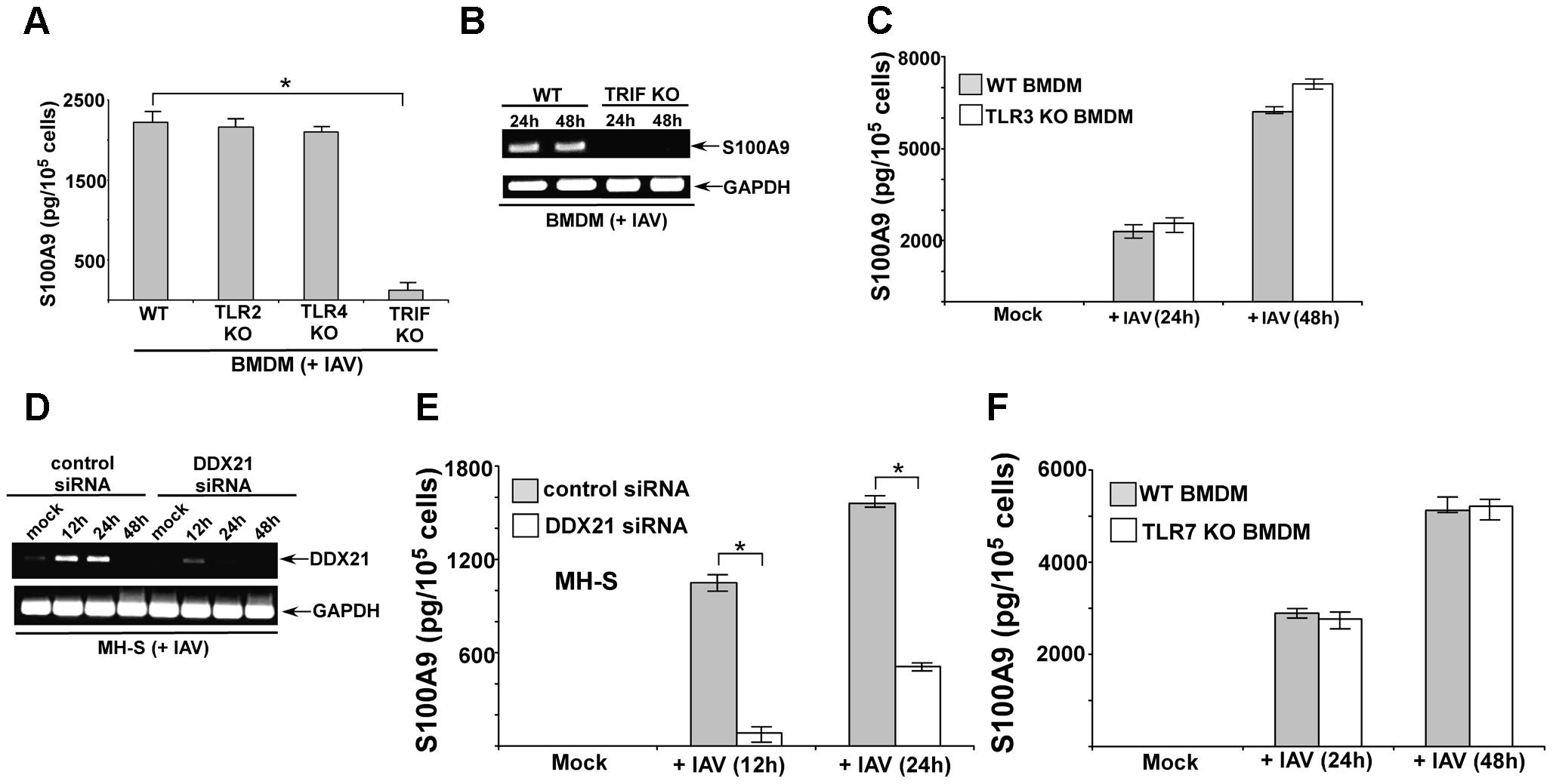 DDX21 and TRIF is required for S100A9 production from IAV infected macrophages.