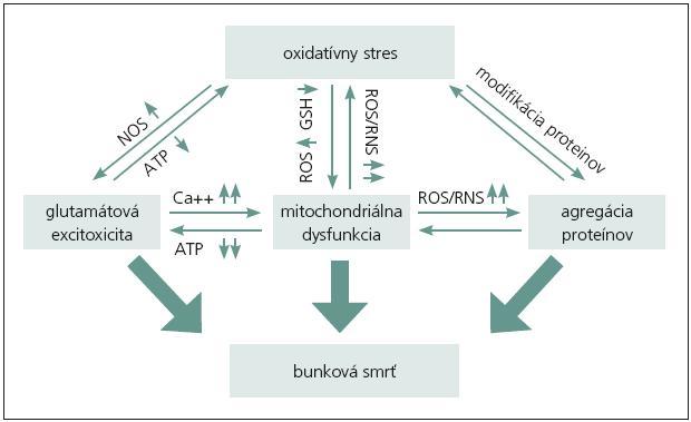 Vzťah medzi oxidačným stresom a ostatnými procesmi zahrnutými v neurodedegerácii a zániku neurónov [1].