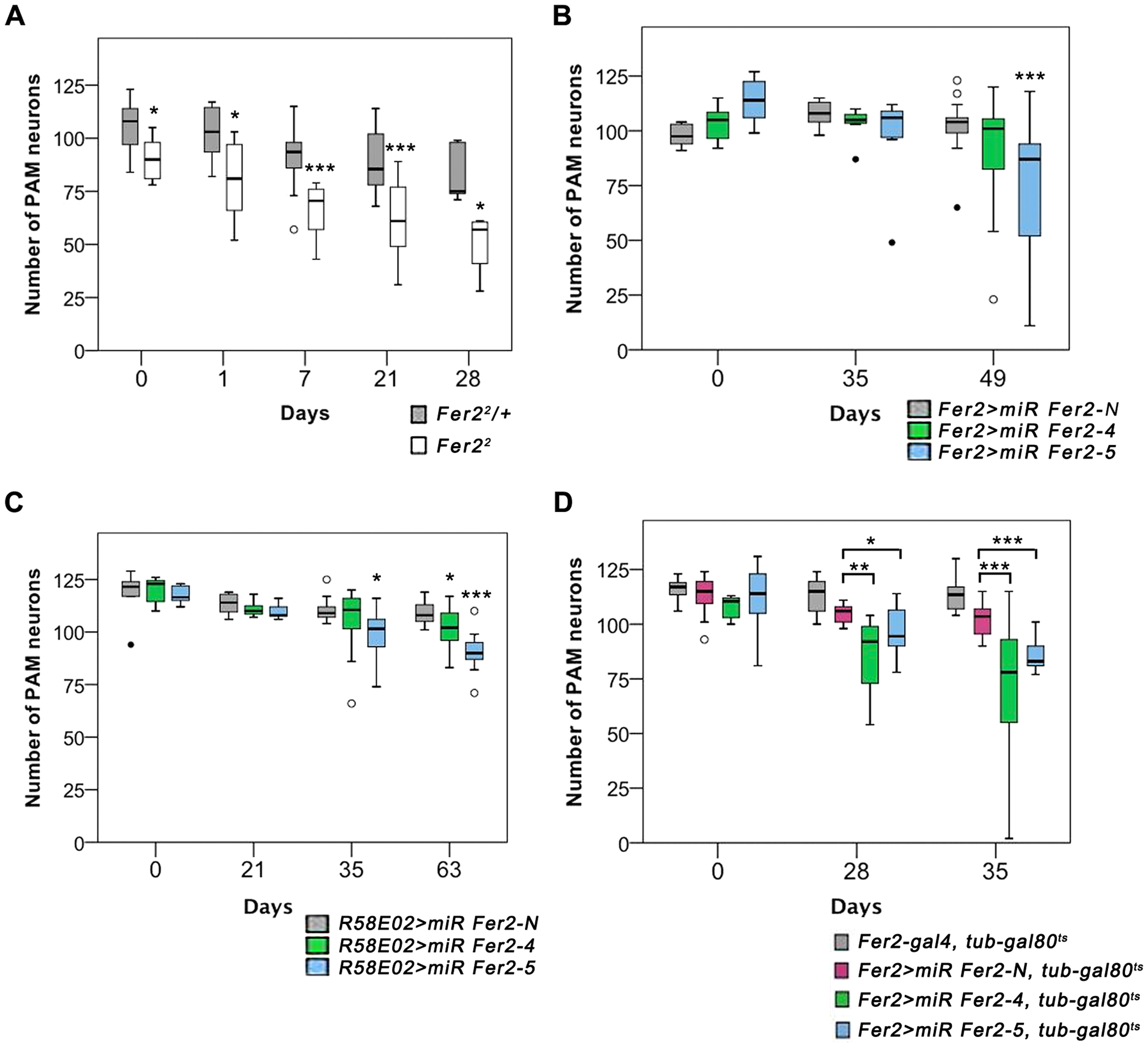 Partial loss of <i>Fer2</i> expression impairs the viability of PAM neurons in aging flies.