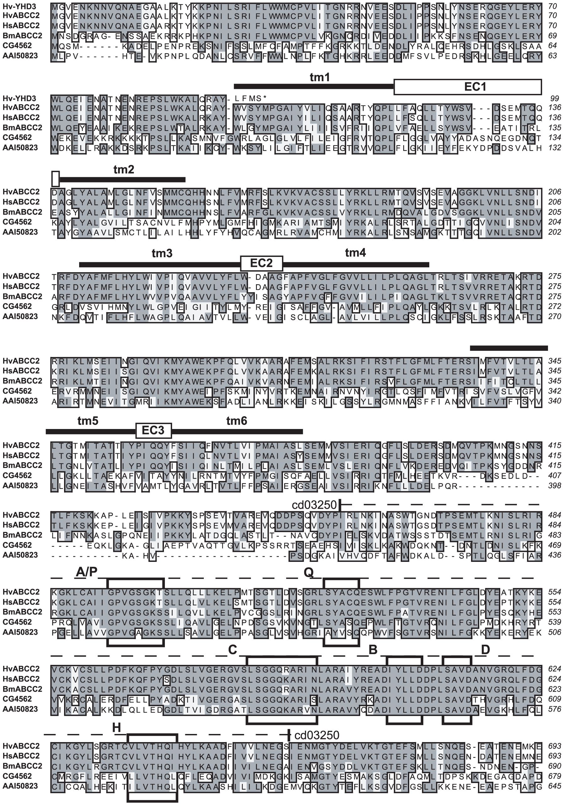Sequence alignment of ABCC proteins from Lepidoptera, <i>Drosophila</i>, and mouse, Part 1.