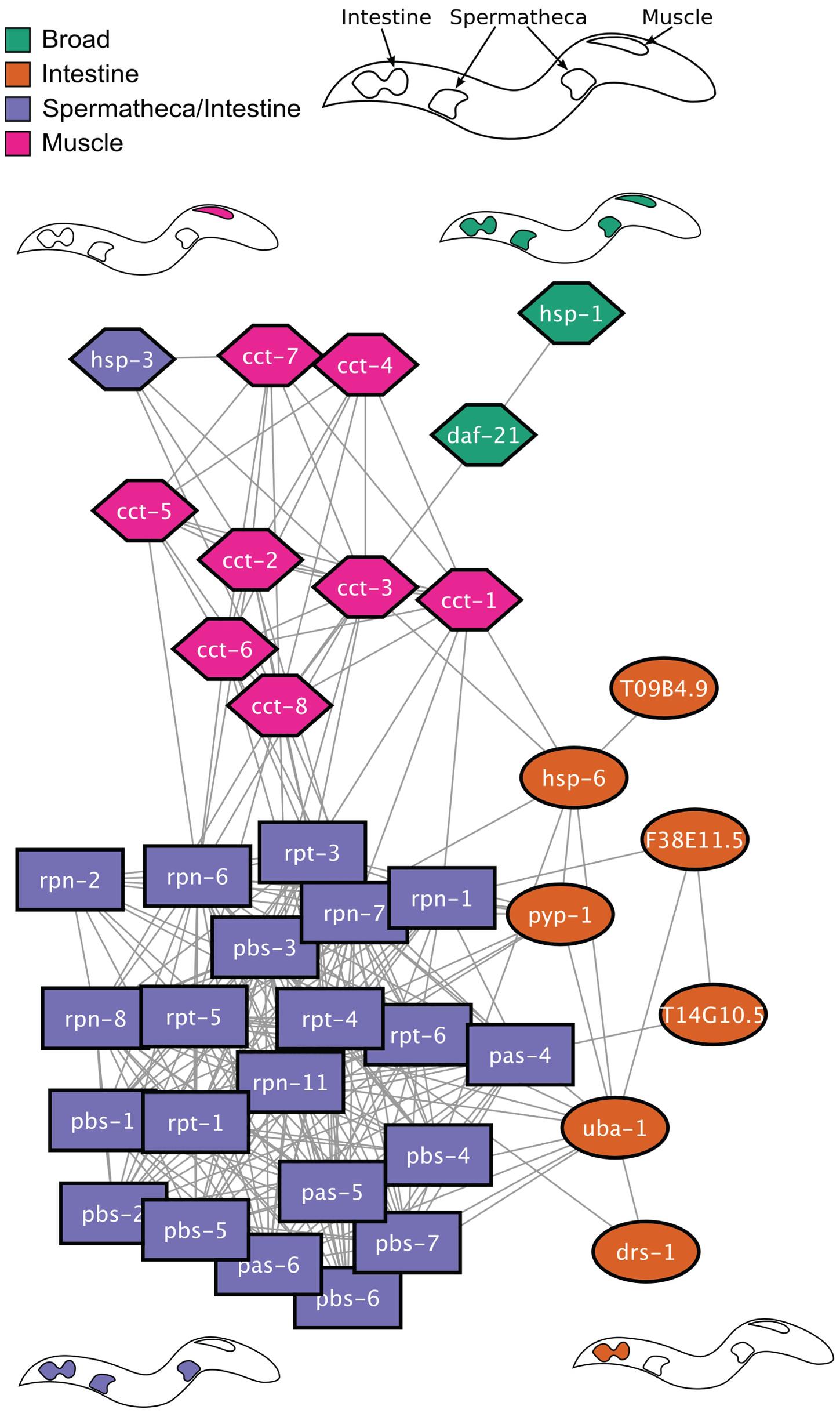 Network analysis of HSR regulators.