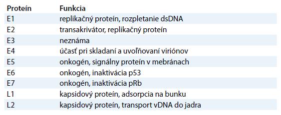 Tabuľka znázorňujúca funkciu jednotlivých génov papilómov [11].
