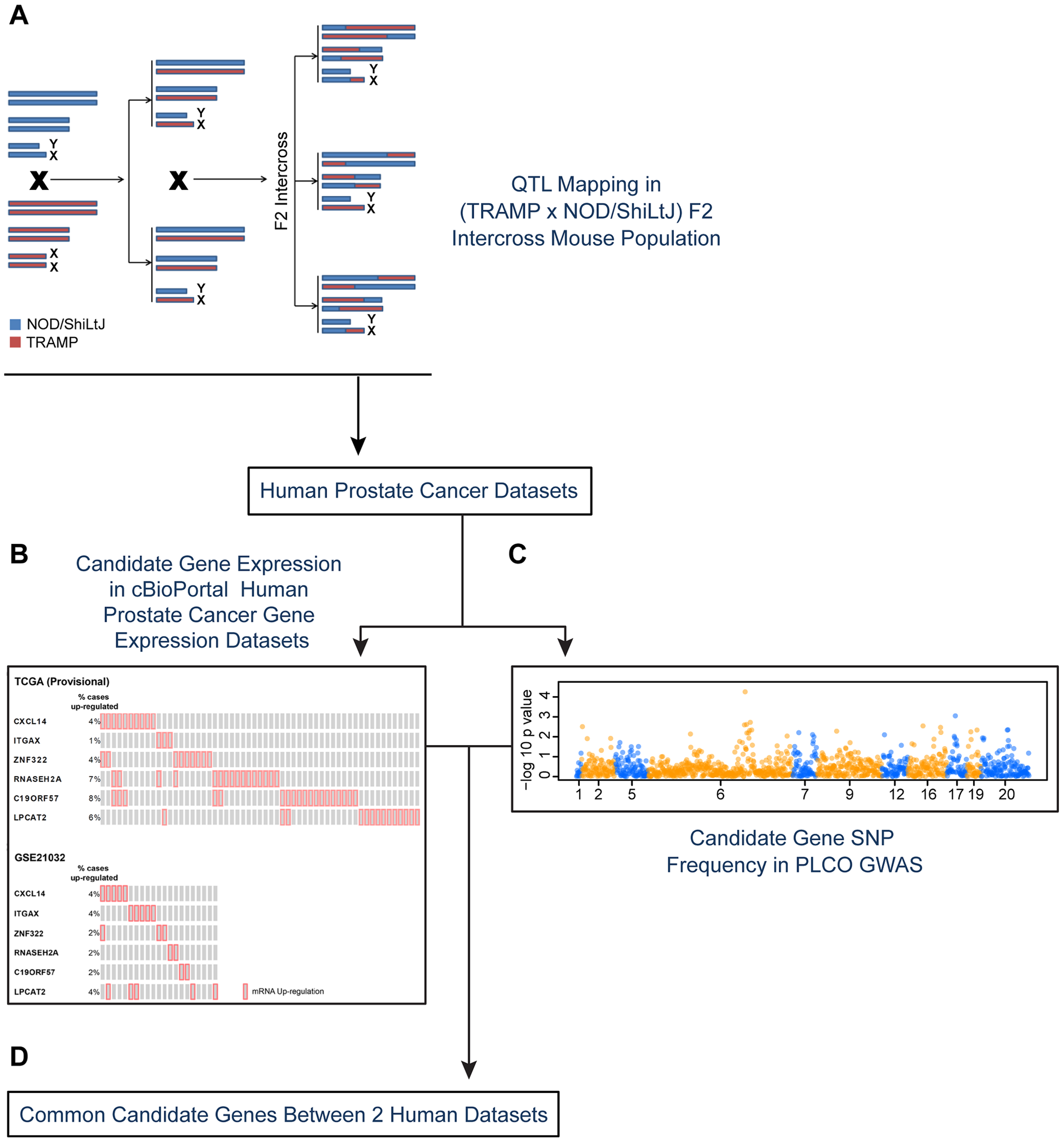 Experimental strategy for identifying novel susceptibility genes for aggressive prostate cancer.