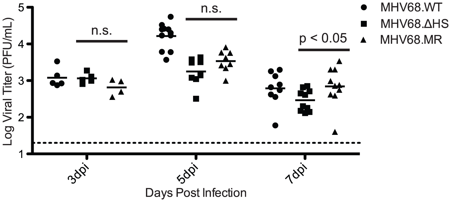 MHV68.ΔHS replicates to near MHV68.MR levels during the acute phase of infection in the mouse lung.
