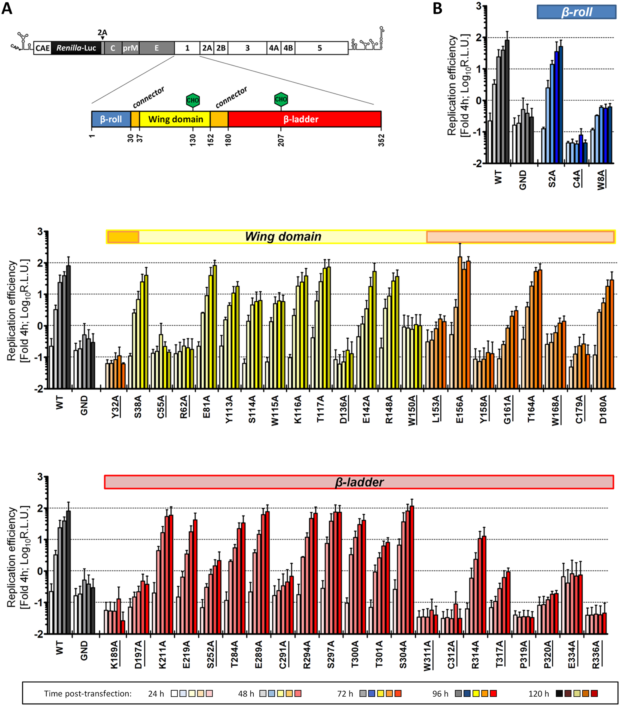 Effect of NS1 Alanine substitutions on DENV replication.