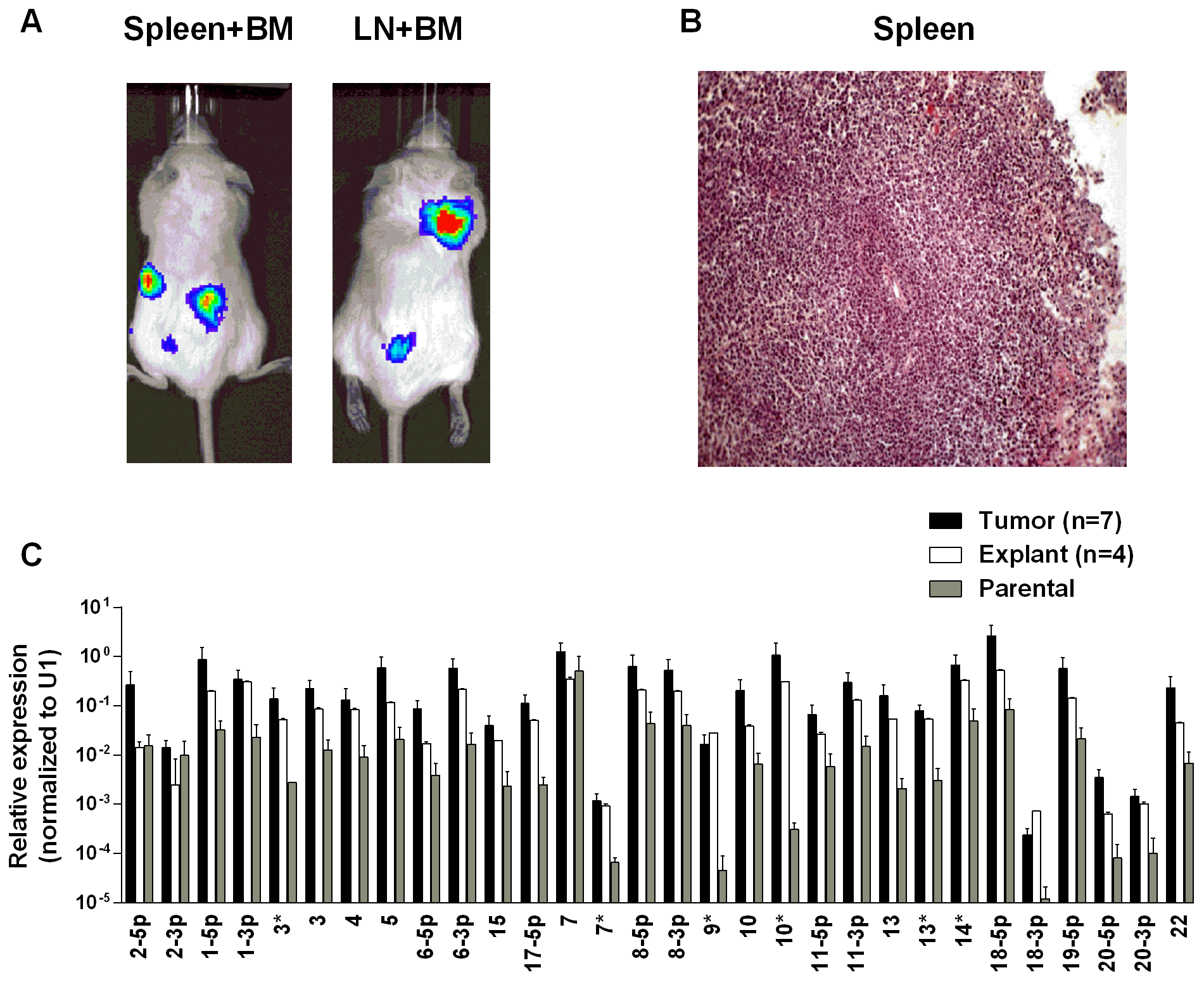 BART miRNA expression is up regulated when lymphoma cells grow <i>in vivo</i>.