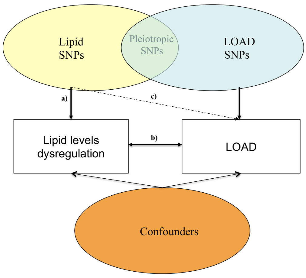 Possible mechanisms through which susceptibility genes act on lipid blood levels and LOAD.