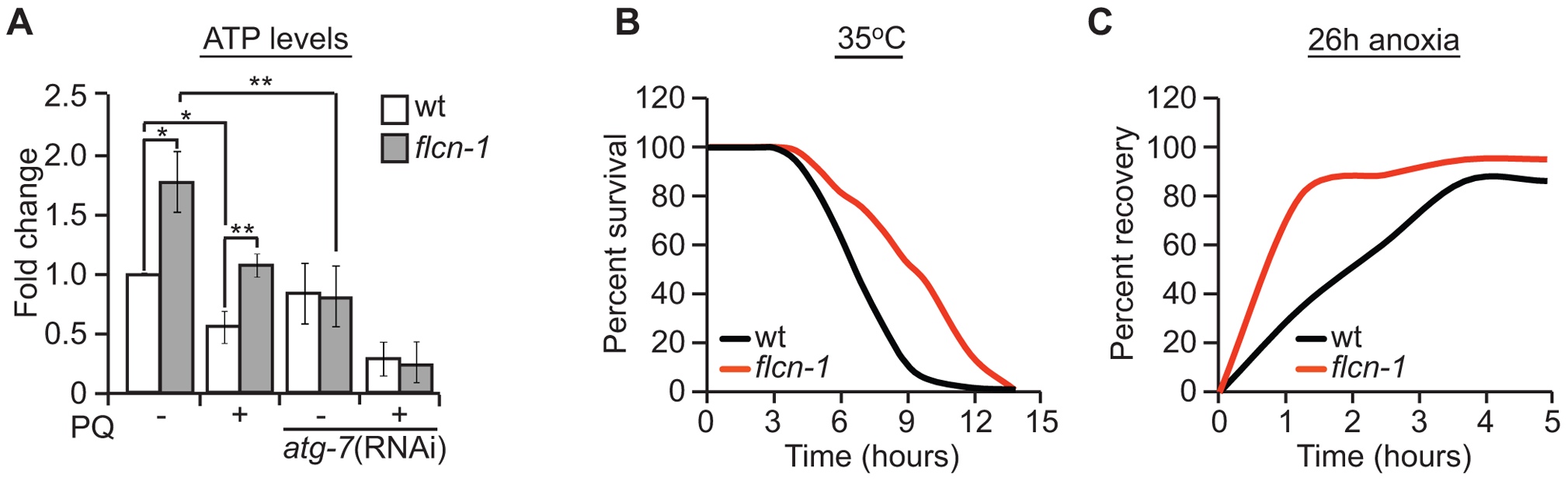 Loss of FLCN stimulates cellular energy production and resistance to energy stress.