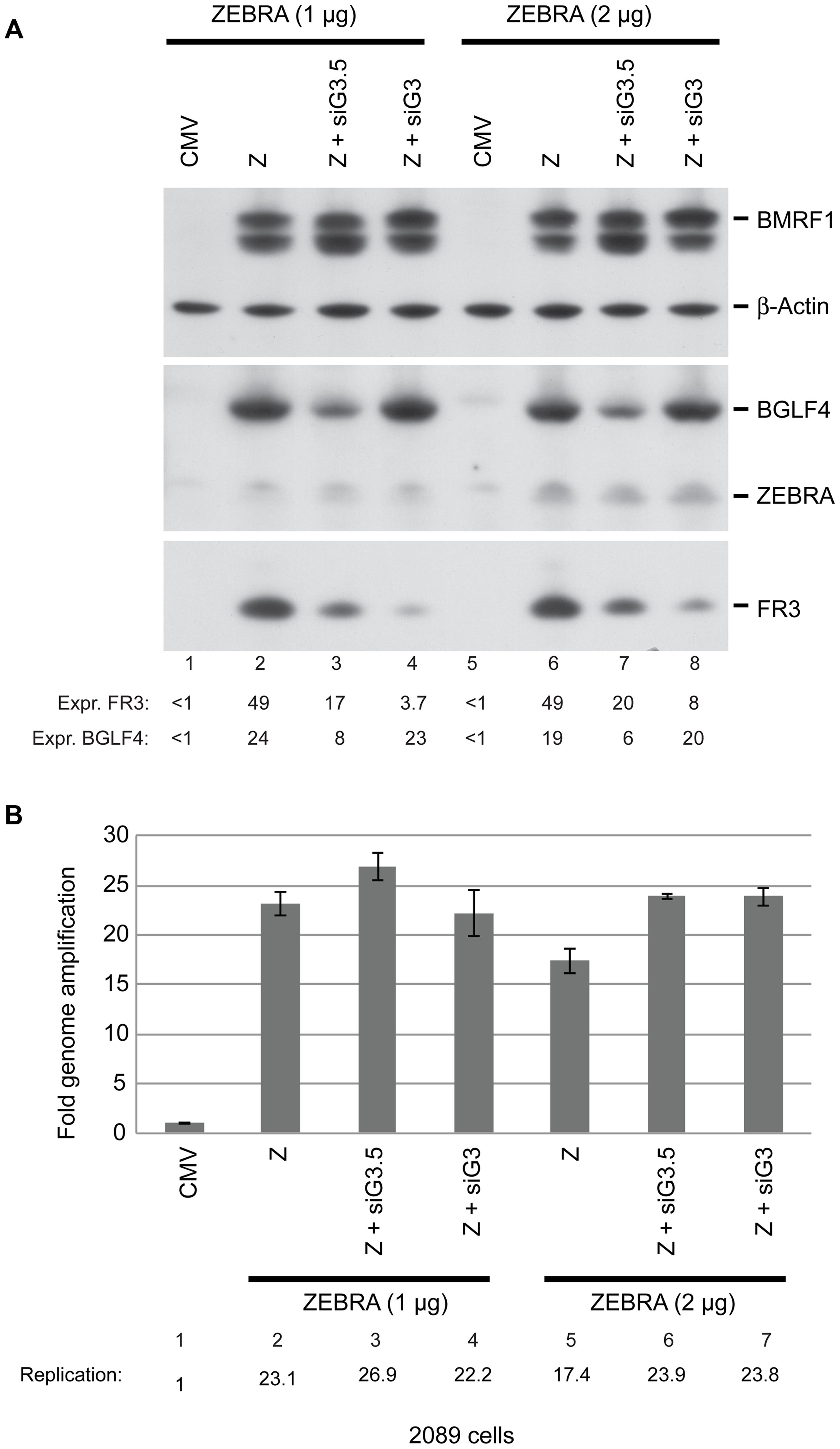 BGLF3 regulates late gene expression.