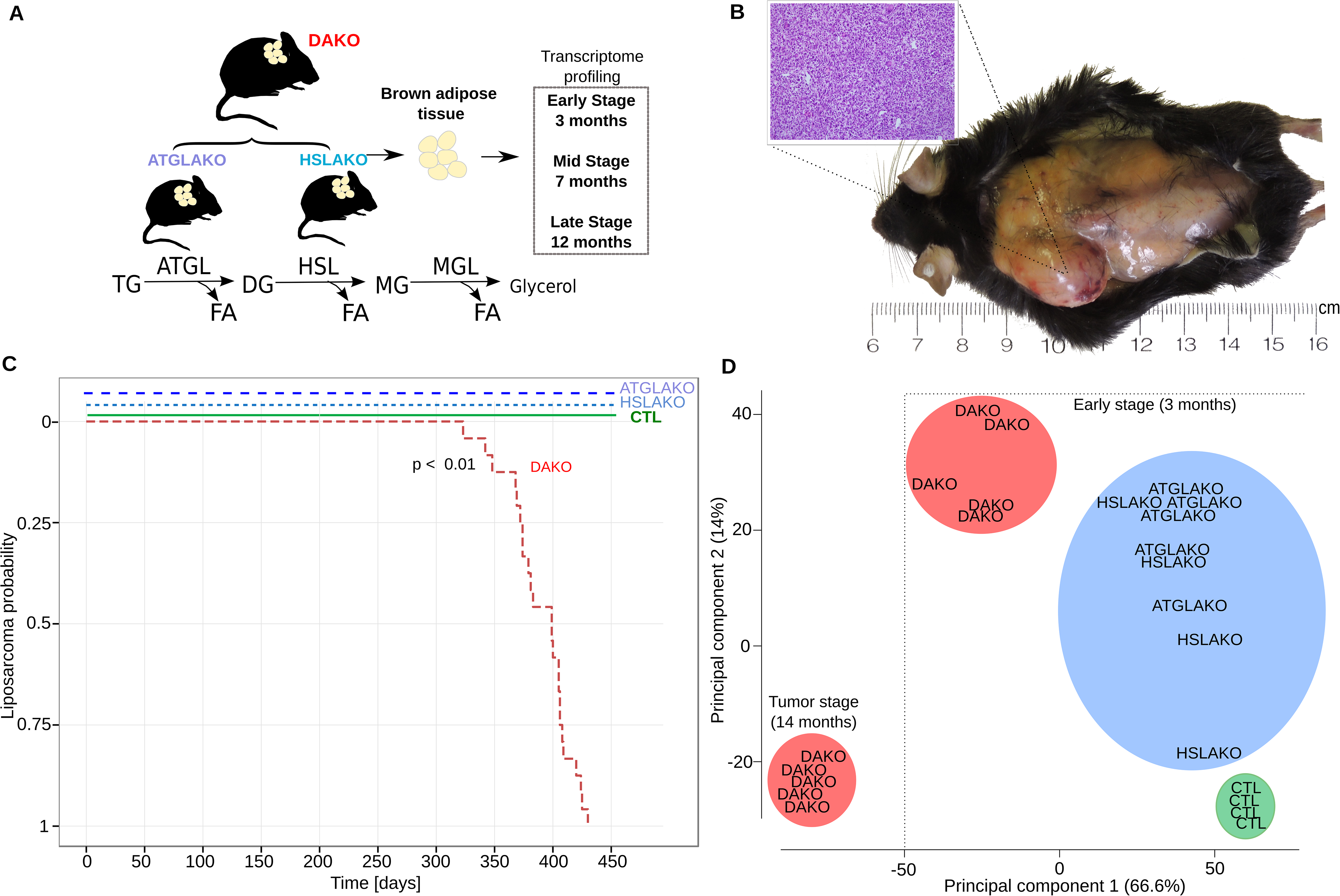 Characterization of lipase-deficient mice.