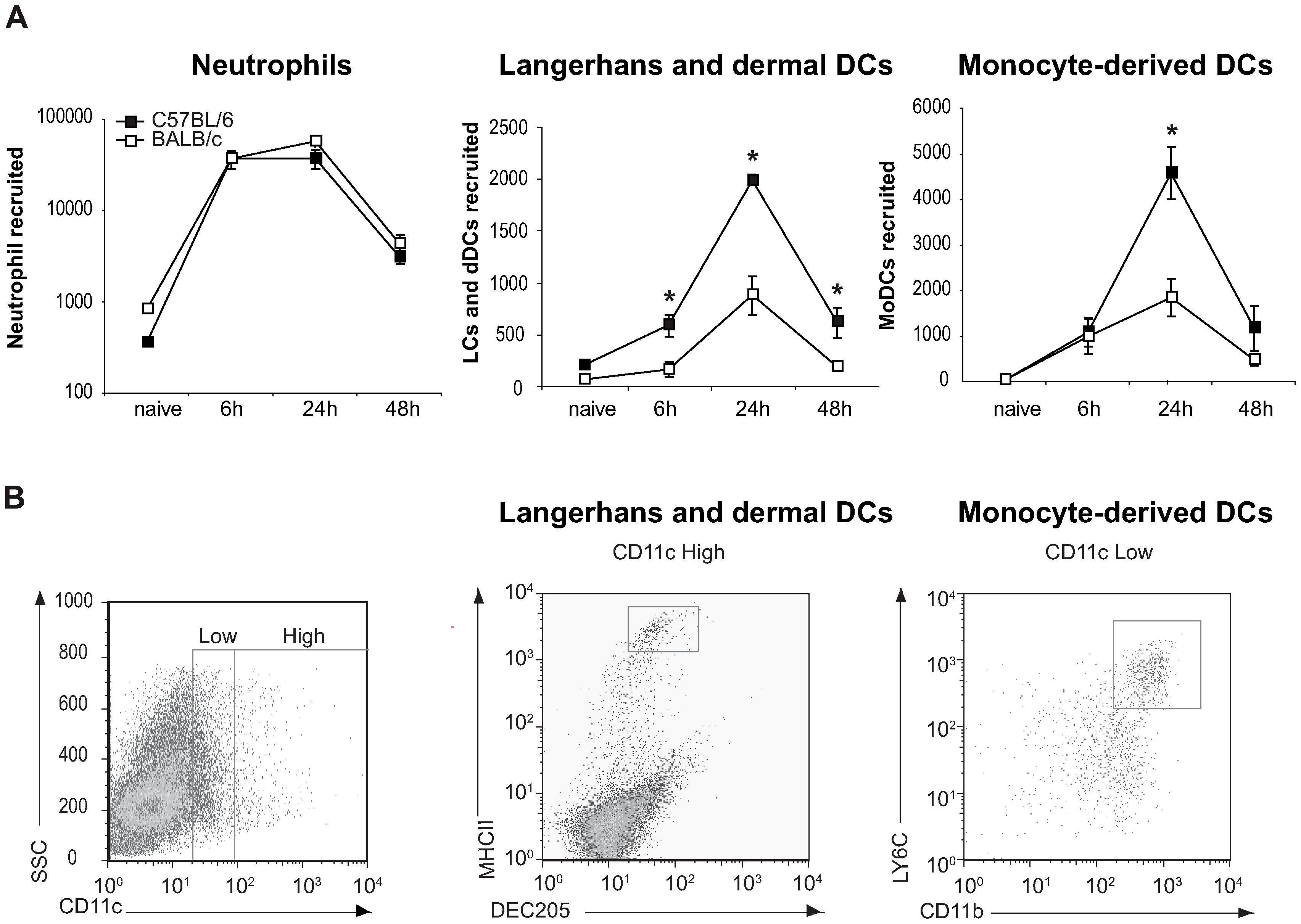 Higher number of DCs are recruited to the ear dermis of <i>L. major</i> infected C57BL/6 compared to BALB/c mice.