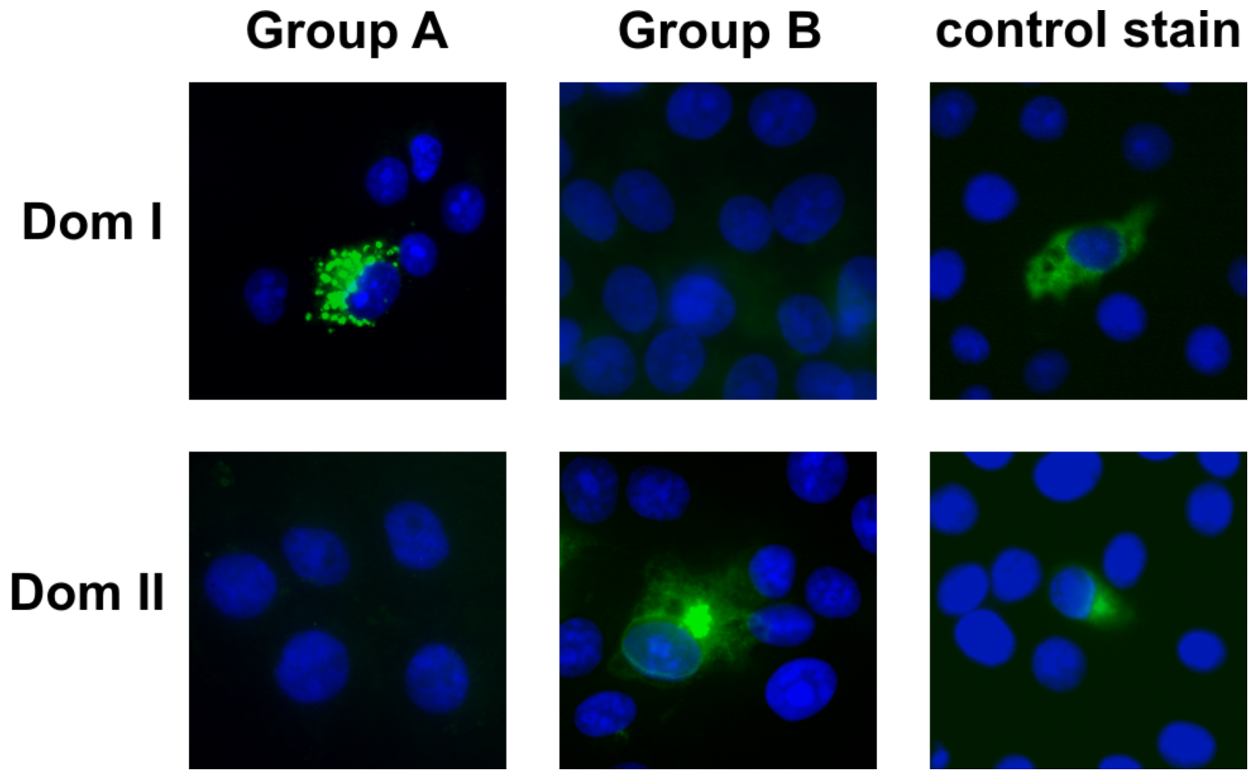 Identification of gB Dom I and Dom II as antibody binding structures.