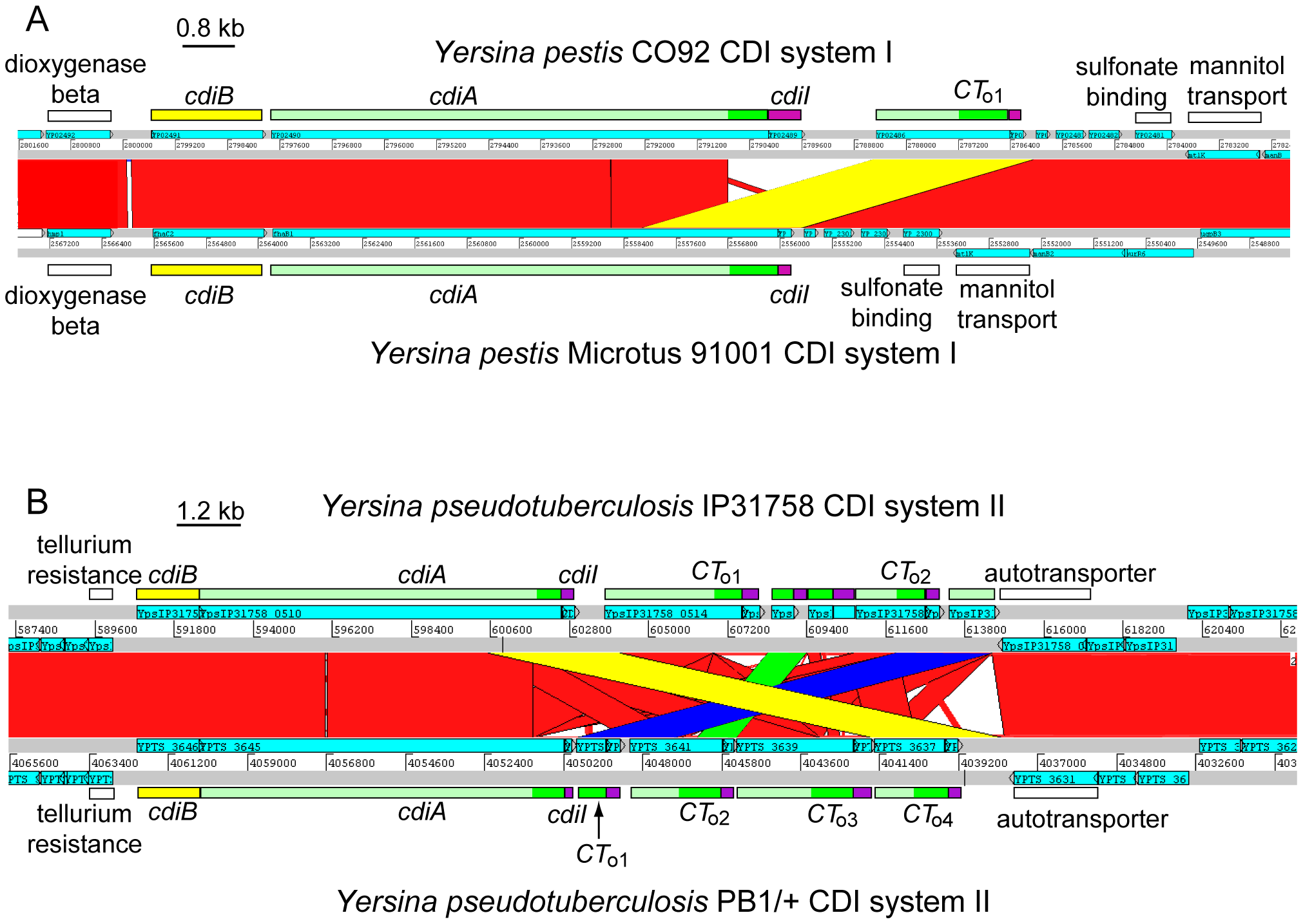 Interchange between <i>cdiA</i> and orphan <i>cdiA-CT</i>s.