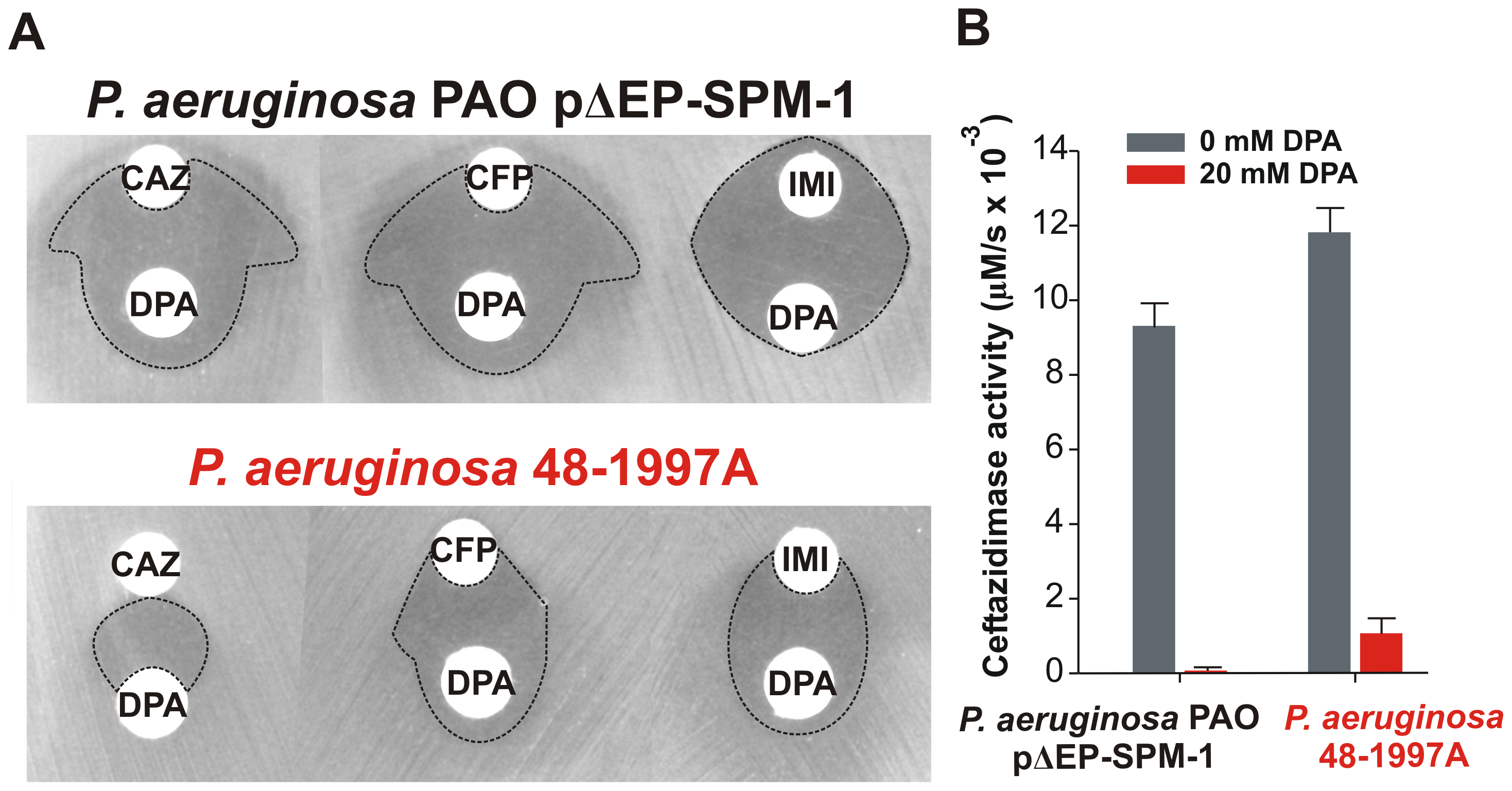 (A) Antibiograms of <i>P. aeruginosa</i> PAO pΔEP-SPM-1 and <i>P. aeruginosa</i> 48-1997A against disks embedded with 30 µg ceftazidime (CAZ), 30 µg cefepime (CFP) and 10 µg imipenem (IMI), alone or faced to 1.5 mg dipicolinic acid (DPA) containing disks.