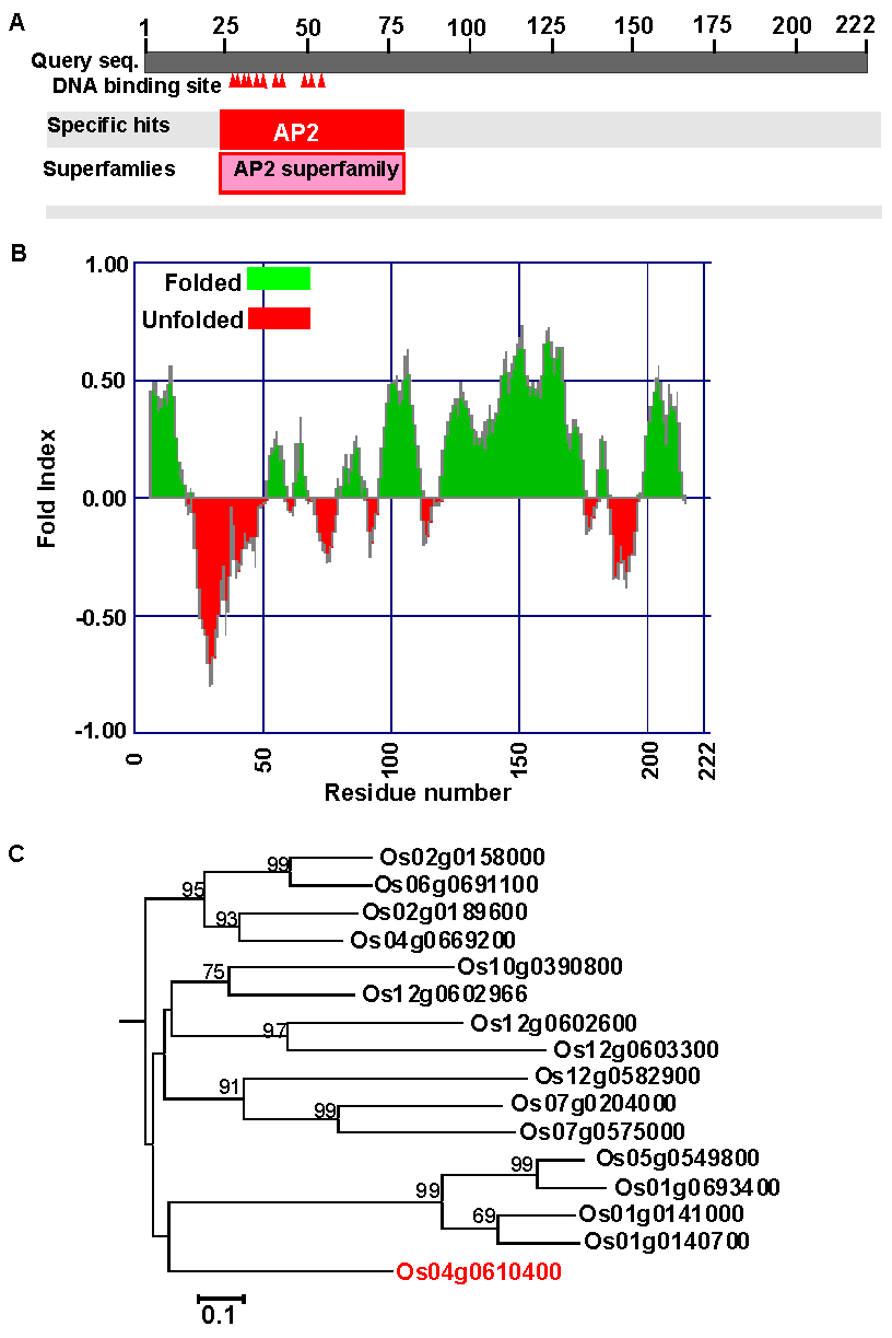 <i>OsAP2-39</i> (<i>Os04g52090</i>) has unique features among the <i>AP2</i> gene family.