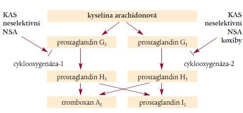 Schéma 2. Úloha cyklooxygenázy v cévním systému ve vztahu k trombotickému procesu.