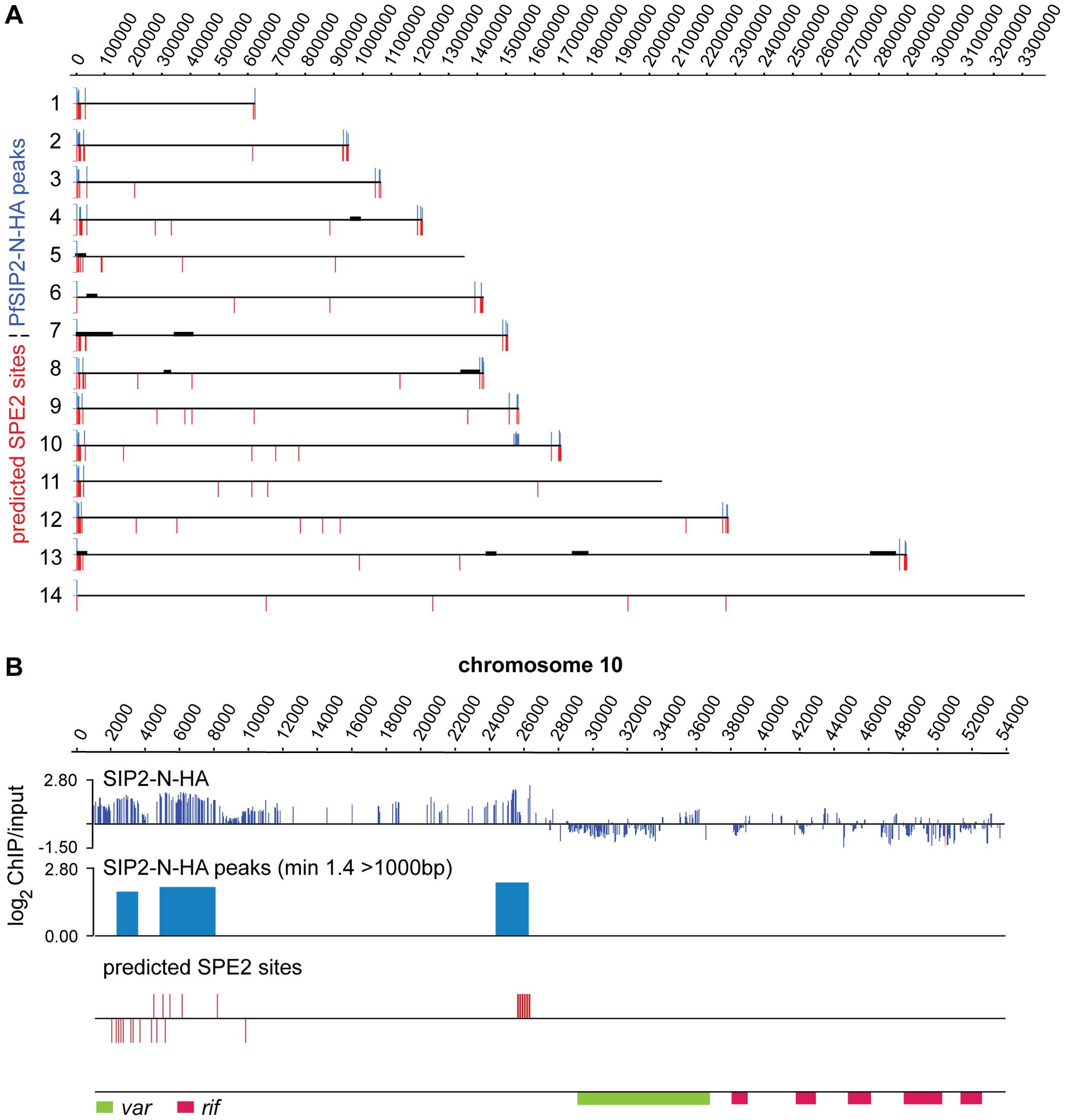 PfSIP2-N binds to SPE2 landmarks in subtelomeric regions of <i>P. falciparum</i> chromosomes <i>in vivo</i>.