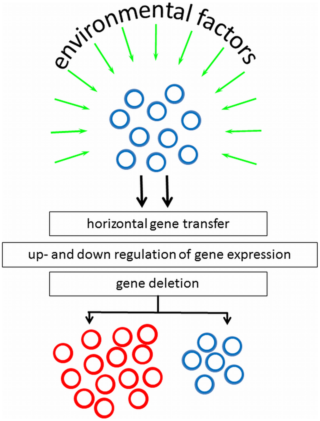 Environmental factors and genotypic mechanisms causative to appearance of subpopulations with altered phenotypic appearance, starting from a culture with homogeneous cell surface properties.