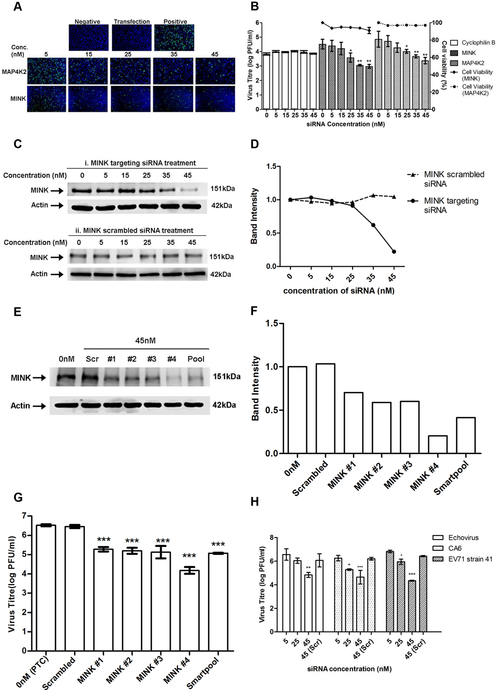 Silencing of MINK significantly reduced EV71 replication in a siRNA concentration-dependent manner.