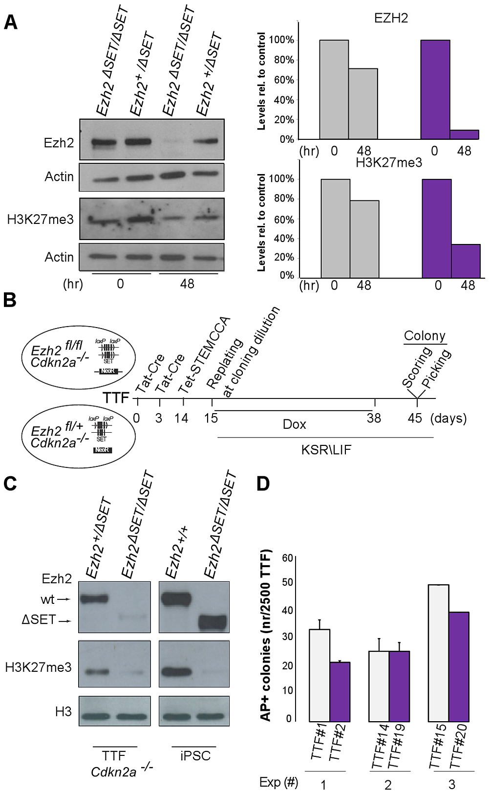 Establishment of iPSC clones upon genome-wide erasure of H3K27me3 at the onset of reprogramming.