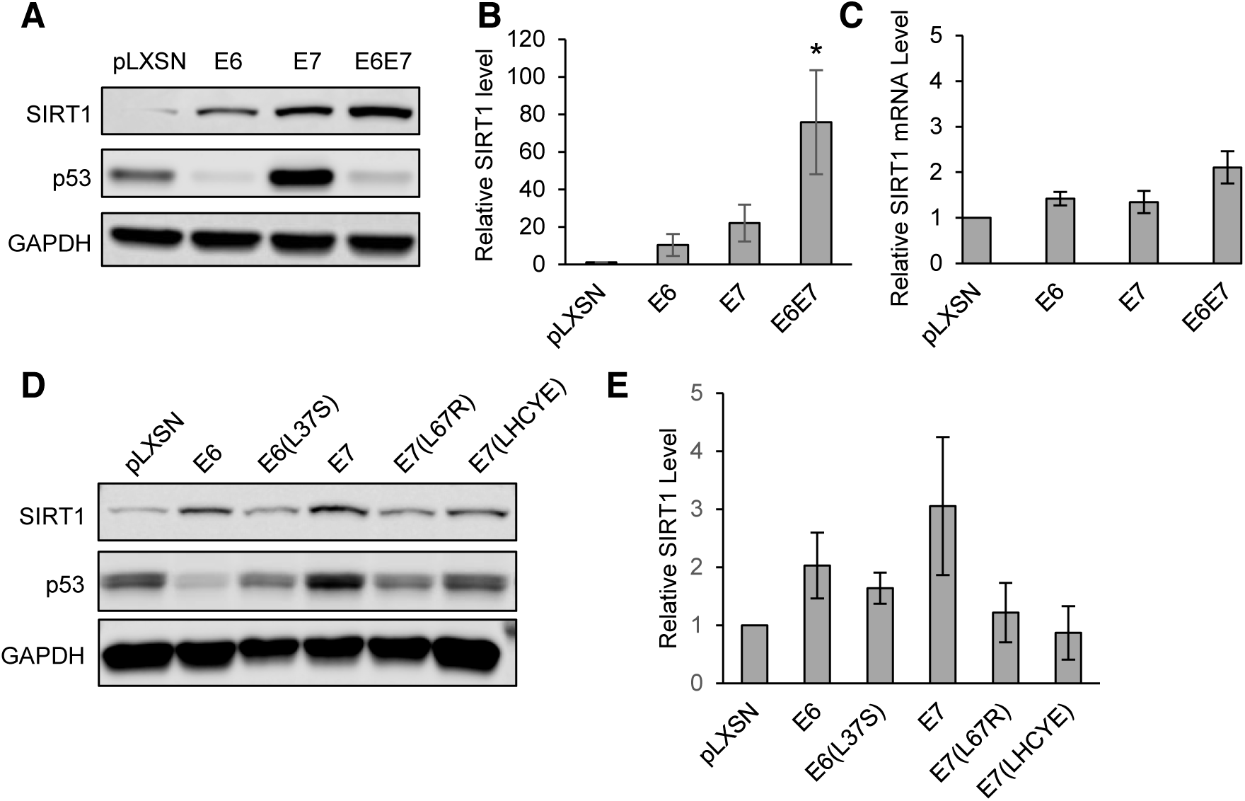HPV31 E6 and E7 both increase levels of SIRT1 protein in primary keratinocytes.
