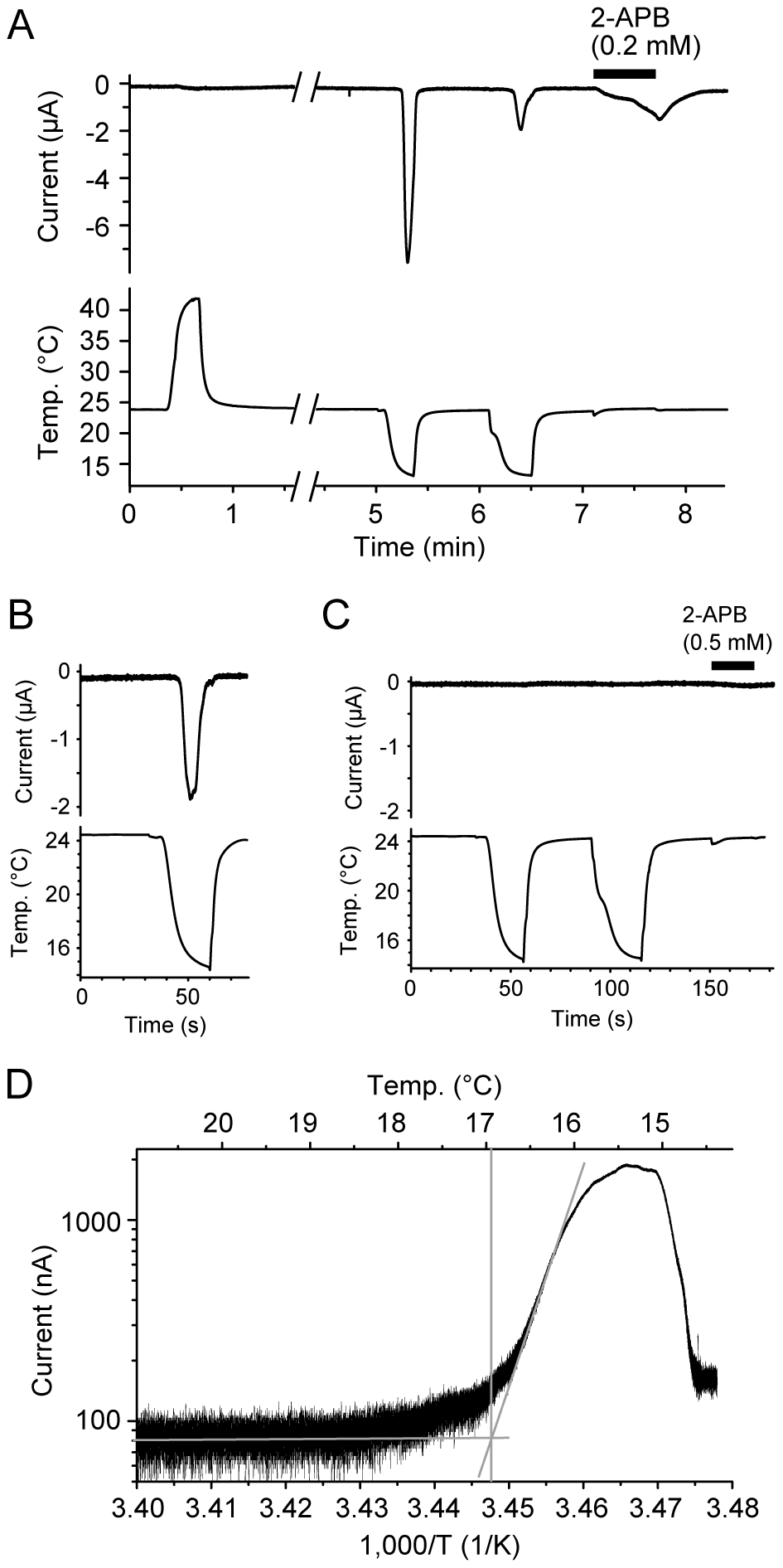 Cold temperature activation of the TRPV3 channel of the western clawed frog.
