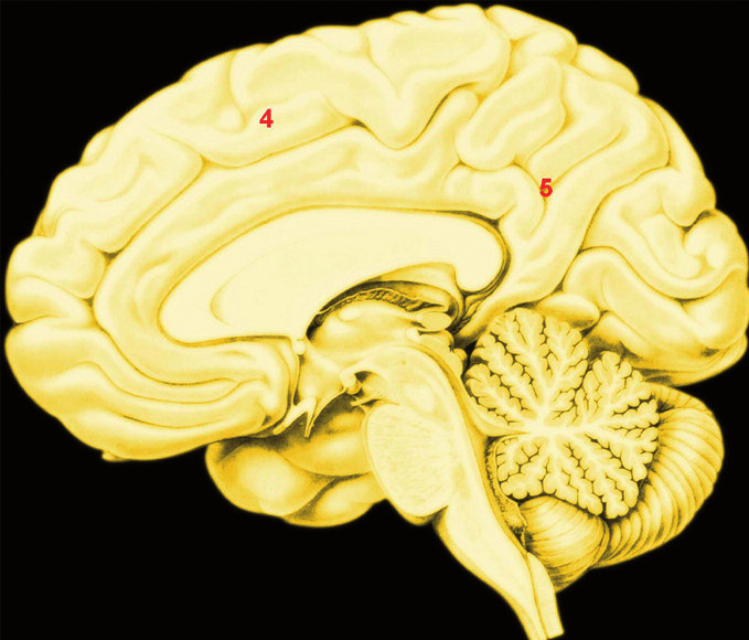 """A. B. Přibližná poloha uzlů konektomu aktivovaného mentalizací Legenda: 5 A – zevní plocha pravé hemisféry; 5 B – vnitřní plocha pravé hemisféry; 1. – temporoparietální junkce; 2. – sulcus temporalis superior zadní část; 3. – temporální pól; 4. – dorsomediální prefrontální kůra; 5. – precuneus a zadní část g. cinguli; Mentalizace je schopnost rozlišit, že druhý člověk má niterné duševní stavy, například záměry, tužby, plány, představy, obecně řečeno, že je """"agent""""."""