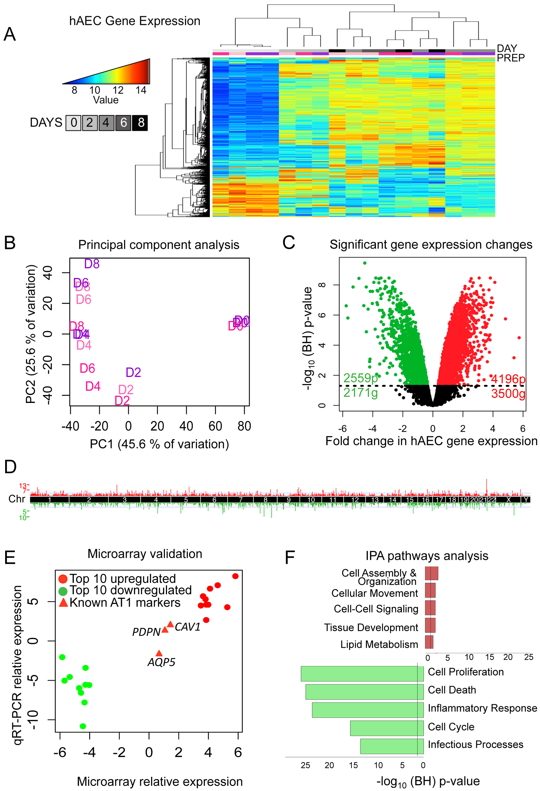 Transcriptomic profiling of human AEC differentiation.